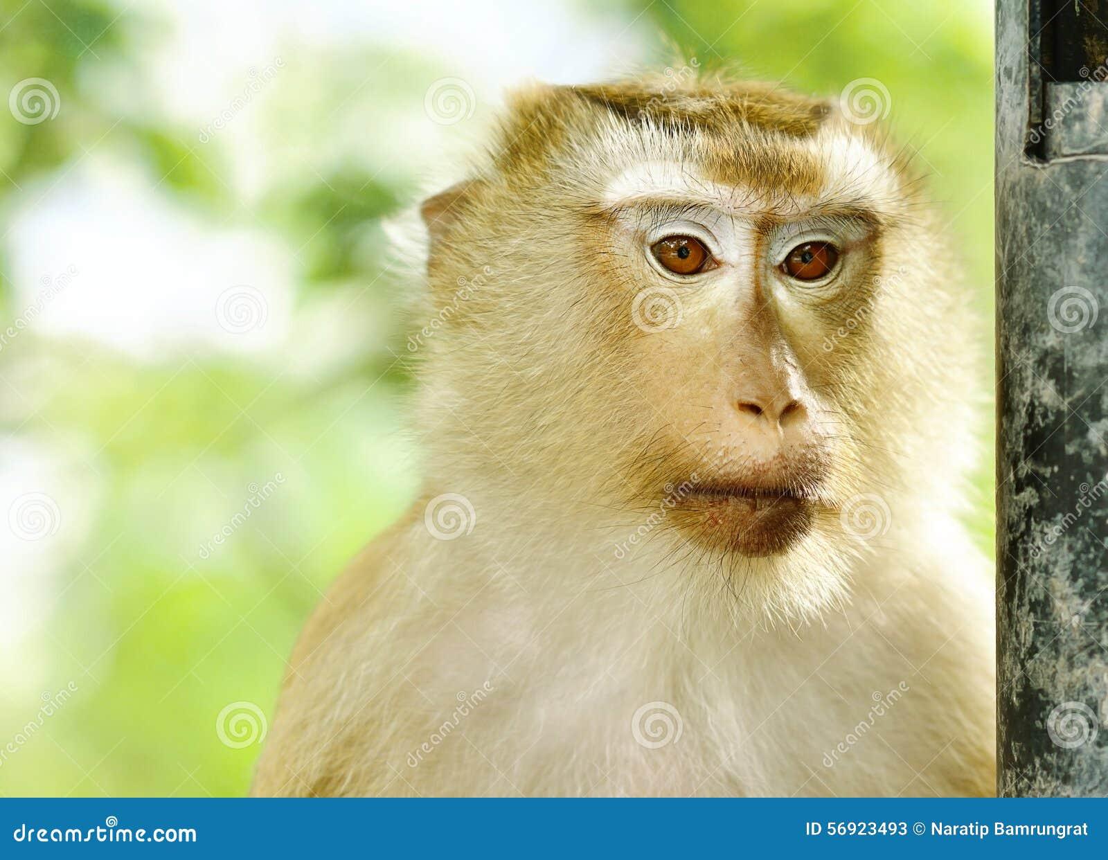 Πίθηκος κινηματογραφήσεων σε πρώτο πλάνο portriat