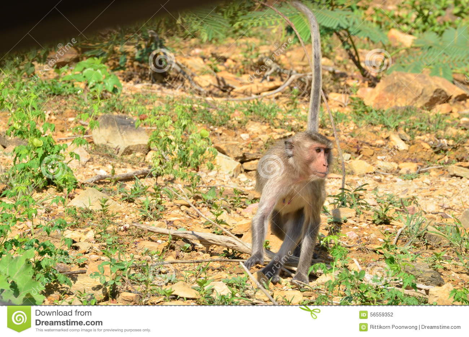 Download Πίθηκος στοκ εικόνες. εικόνα από φύση, θηλαστικό, χέρι - 56559352