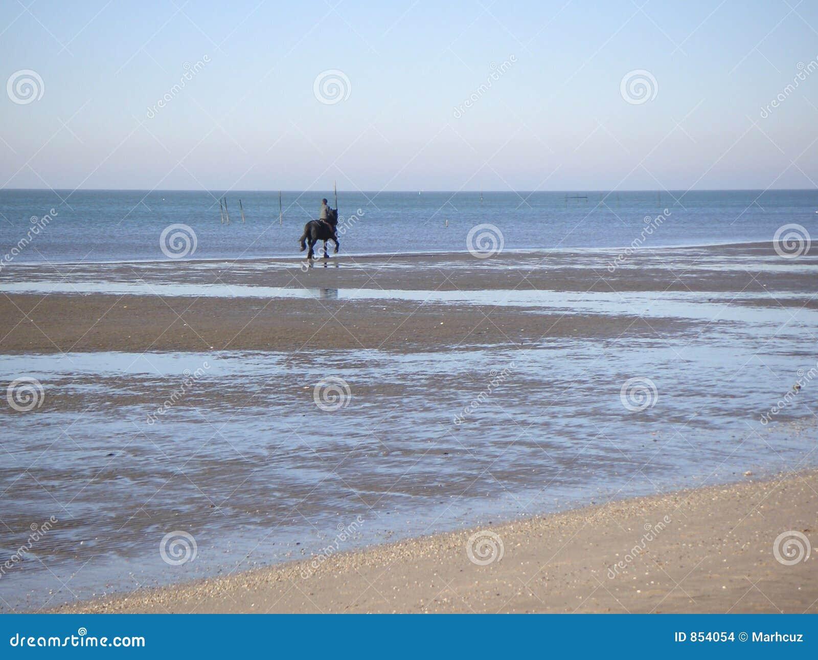 πίσω άλογο παραλιών