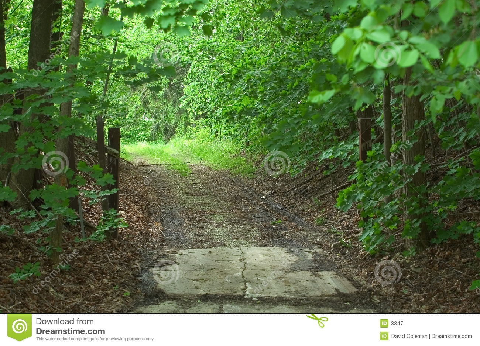 πίσω οδικά δάση