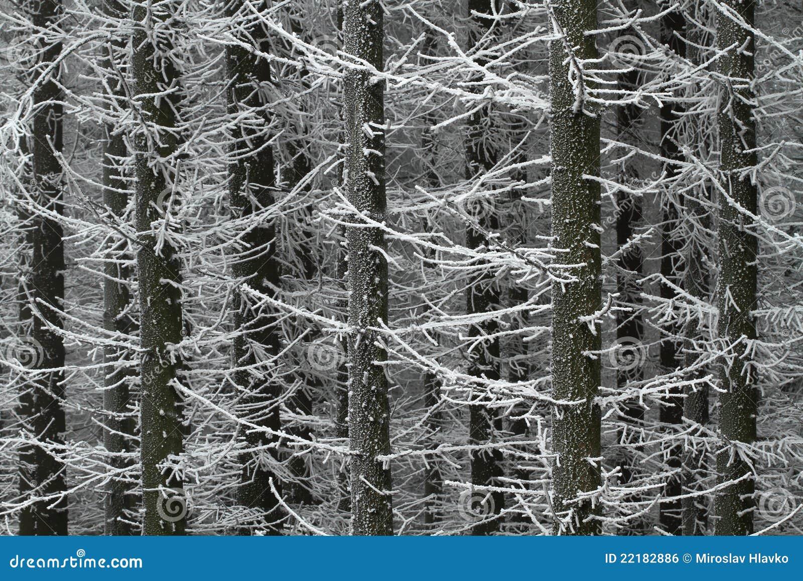 παγωμένα δέντρα