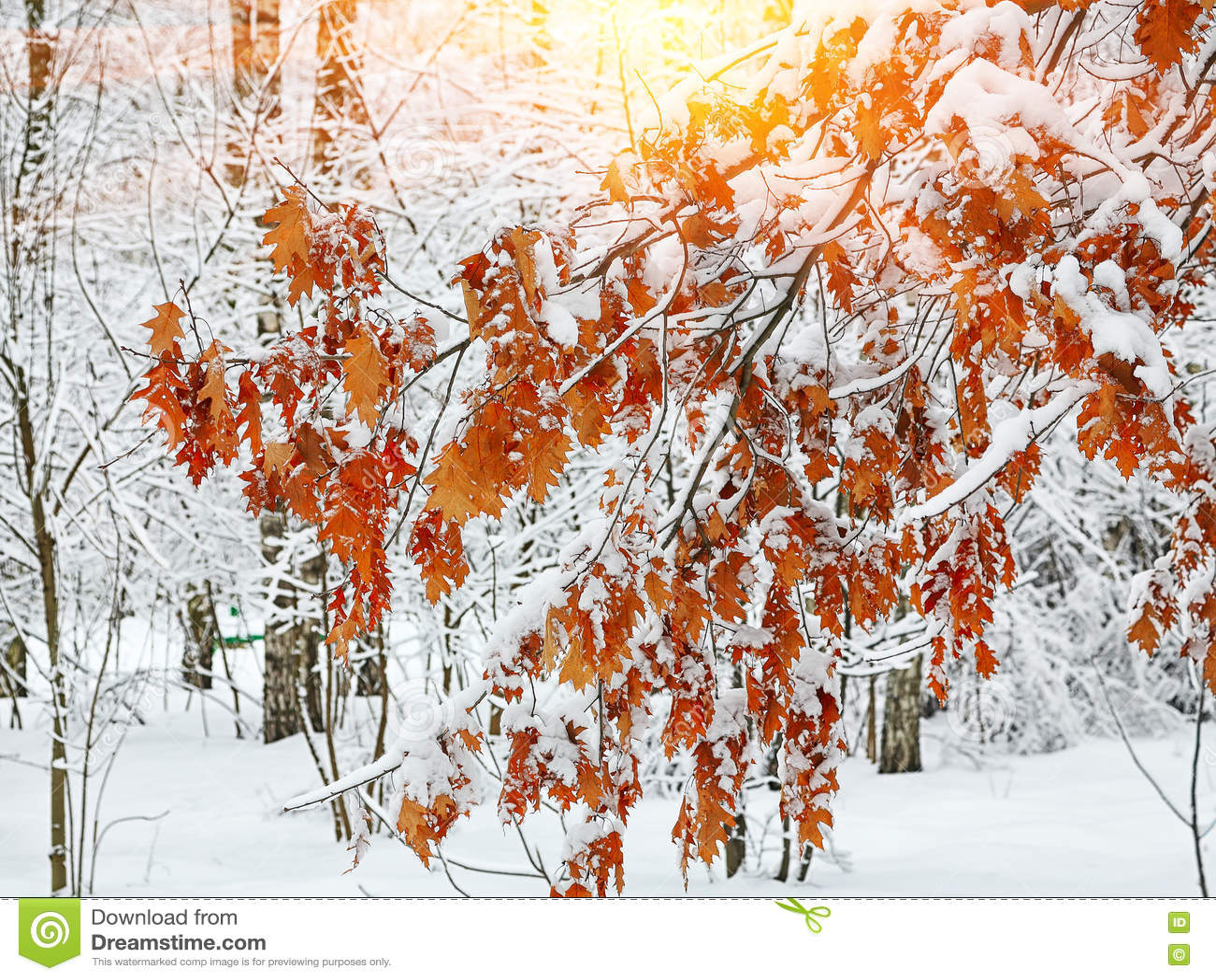 Παγωμένα φύλλα φθινοπώρου στον κλάδο