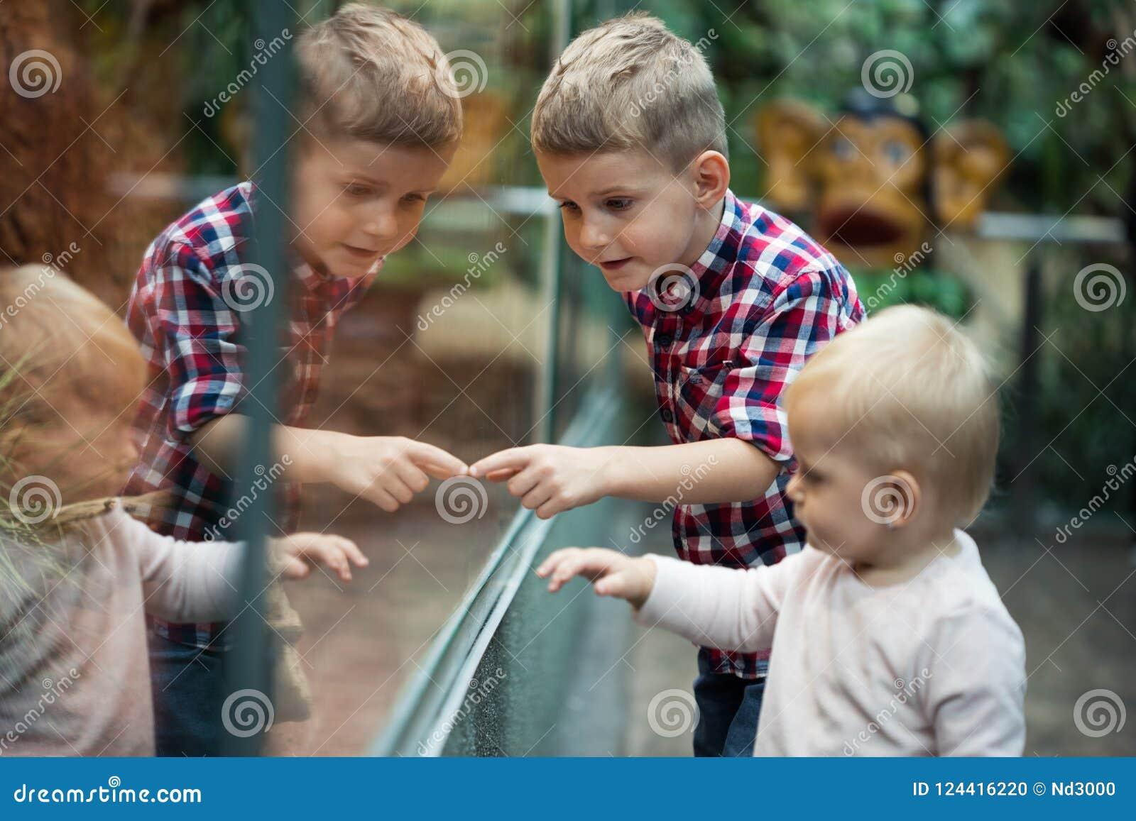 Παιδιά που προσέχουν τα ερπετά στο terrarium μέσω του γυαλιού