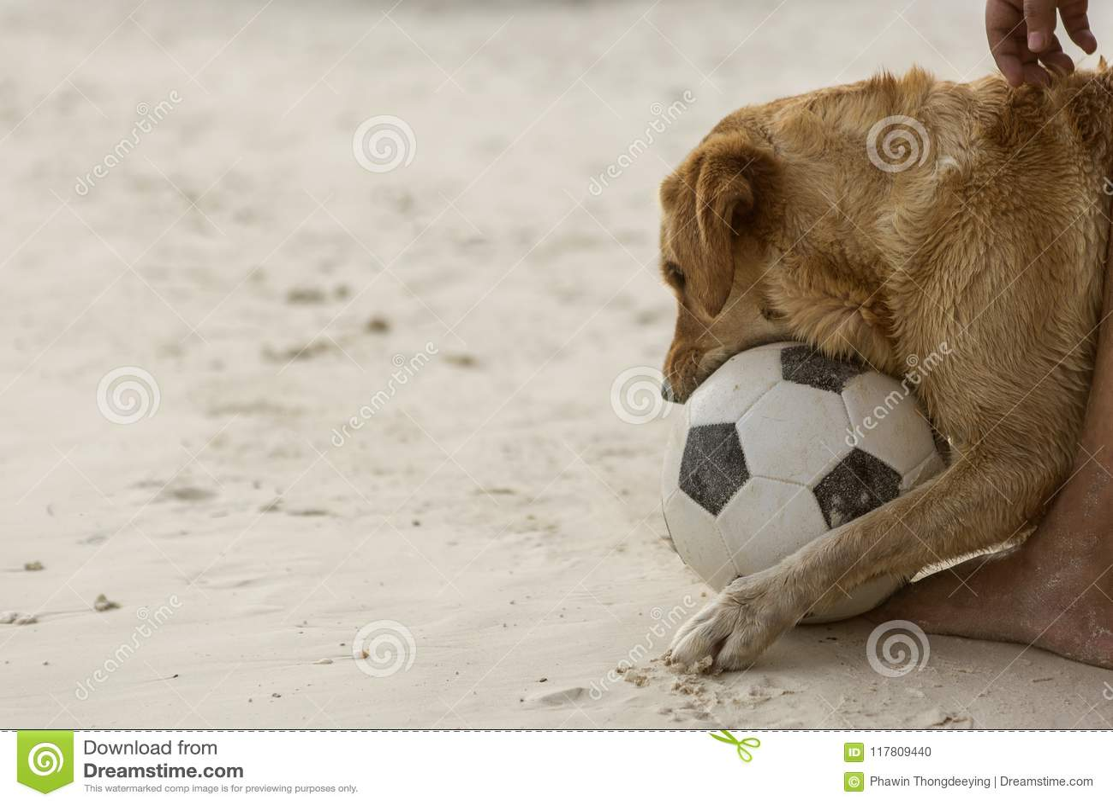 παιχνίδι ποδοσφαίρου σκυλιών
