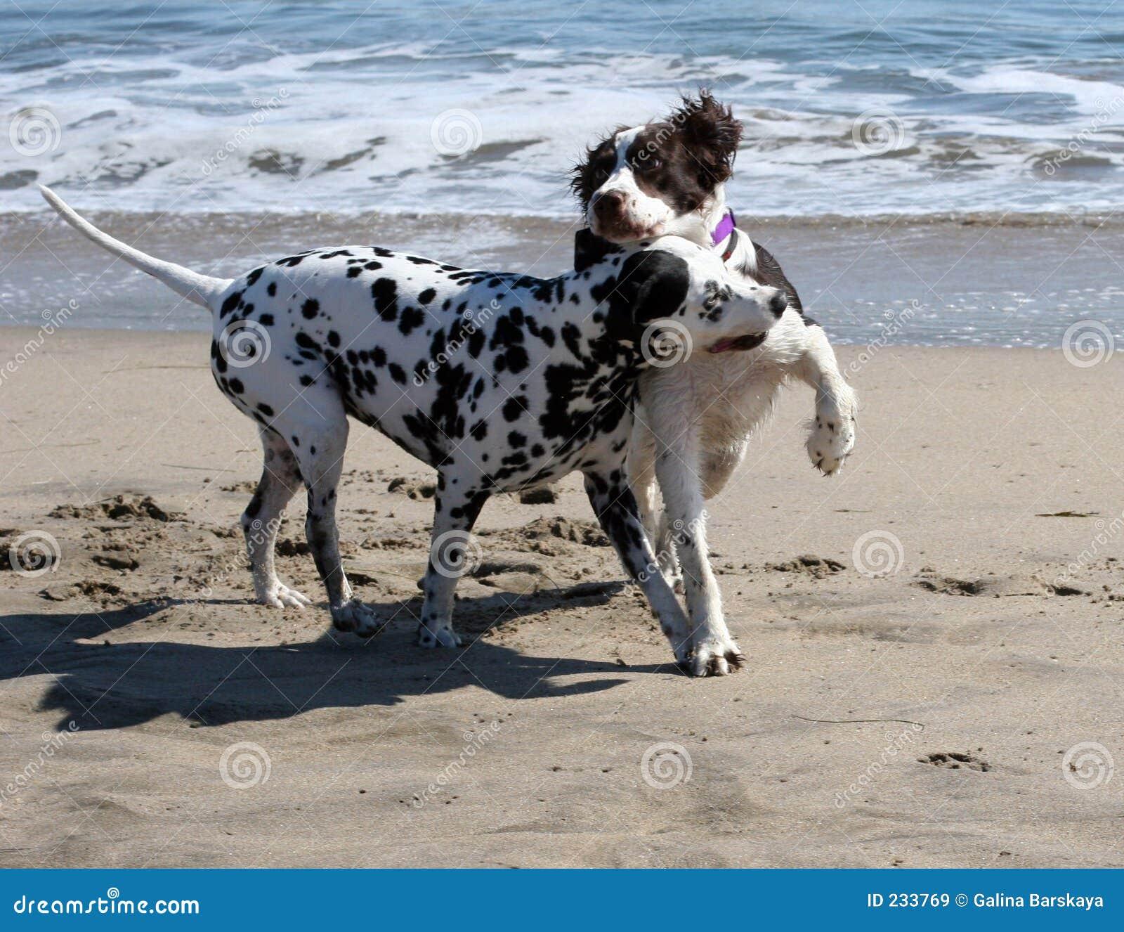 παιχνίδι 2 σκυλιών