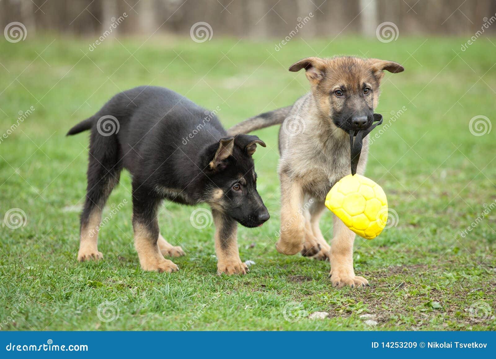 παιχνίδι puppys δύο
