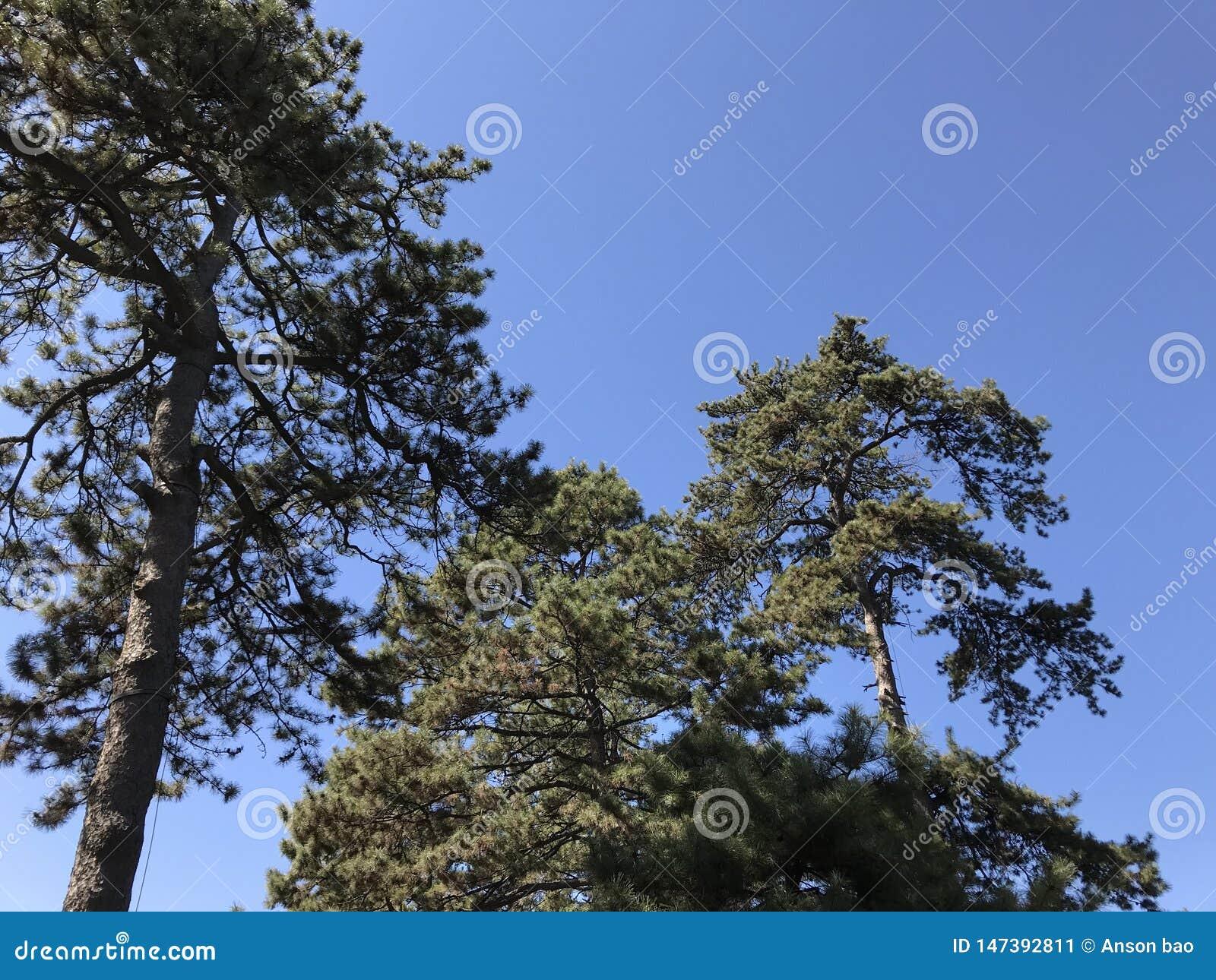 Παλαιά δέντρα την άνοιξη
