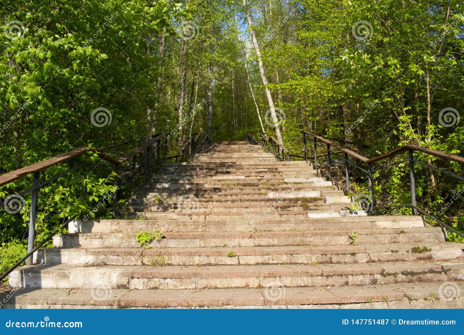 Παλαιά σκάλα δασικό να καταλήξει