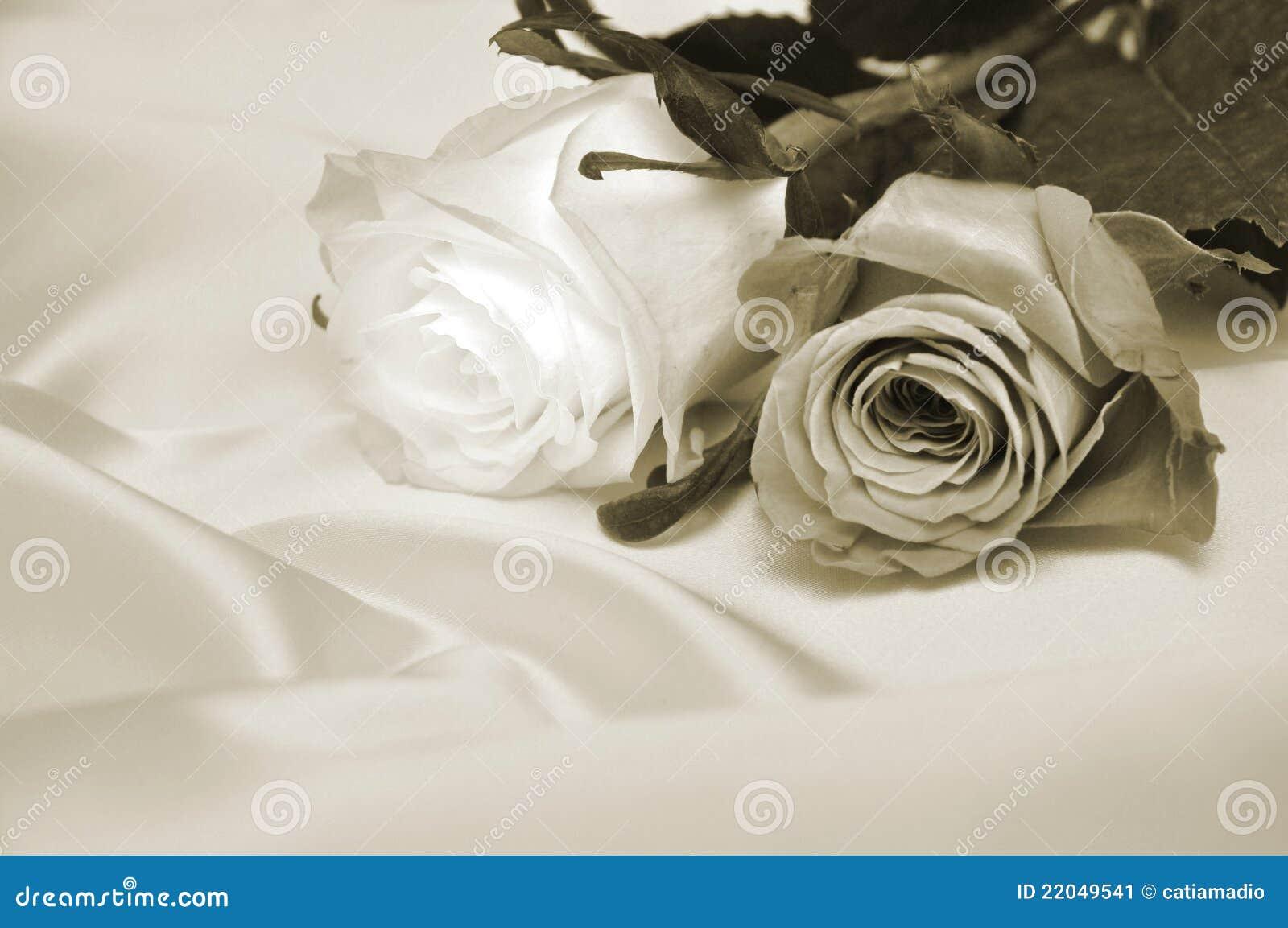 παλαιά τριαντάφυλλα