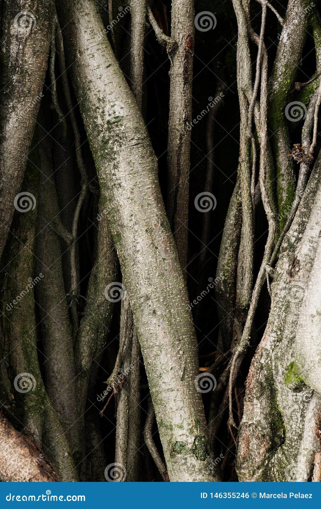 Παλαιές ρίζες δέντρων με τα σκοτεινά σκιών πράσινα συναισθήματα φόβου βρύου τρομακτικά