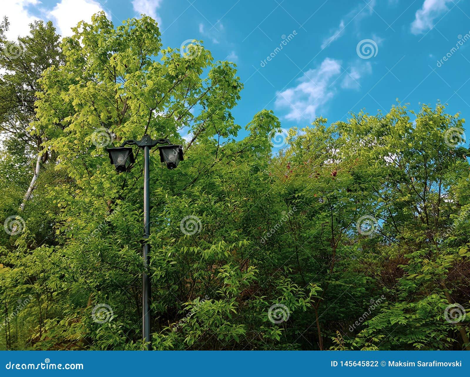 Παλαιός λαμπτήρας οδών στο πάρκο μεταξύ πράσινων treetops και των θάμνων
