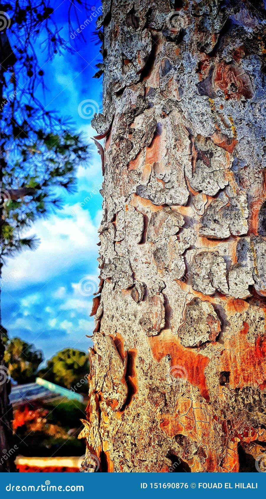 Παλαιός φλοιός δέντρων