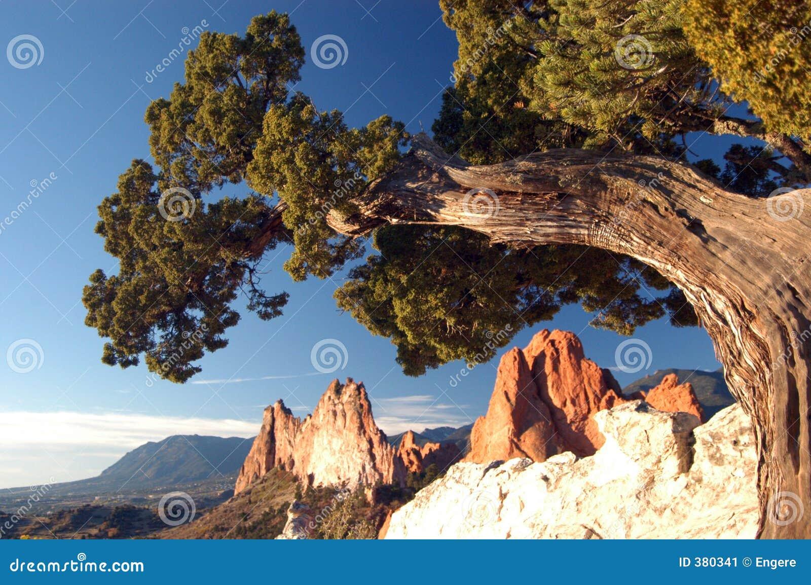 παλαιό δέντρο βράχου σχημα