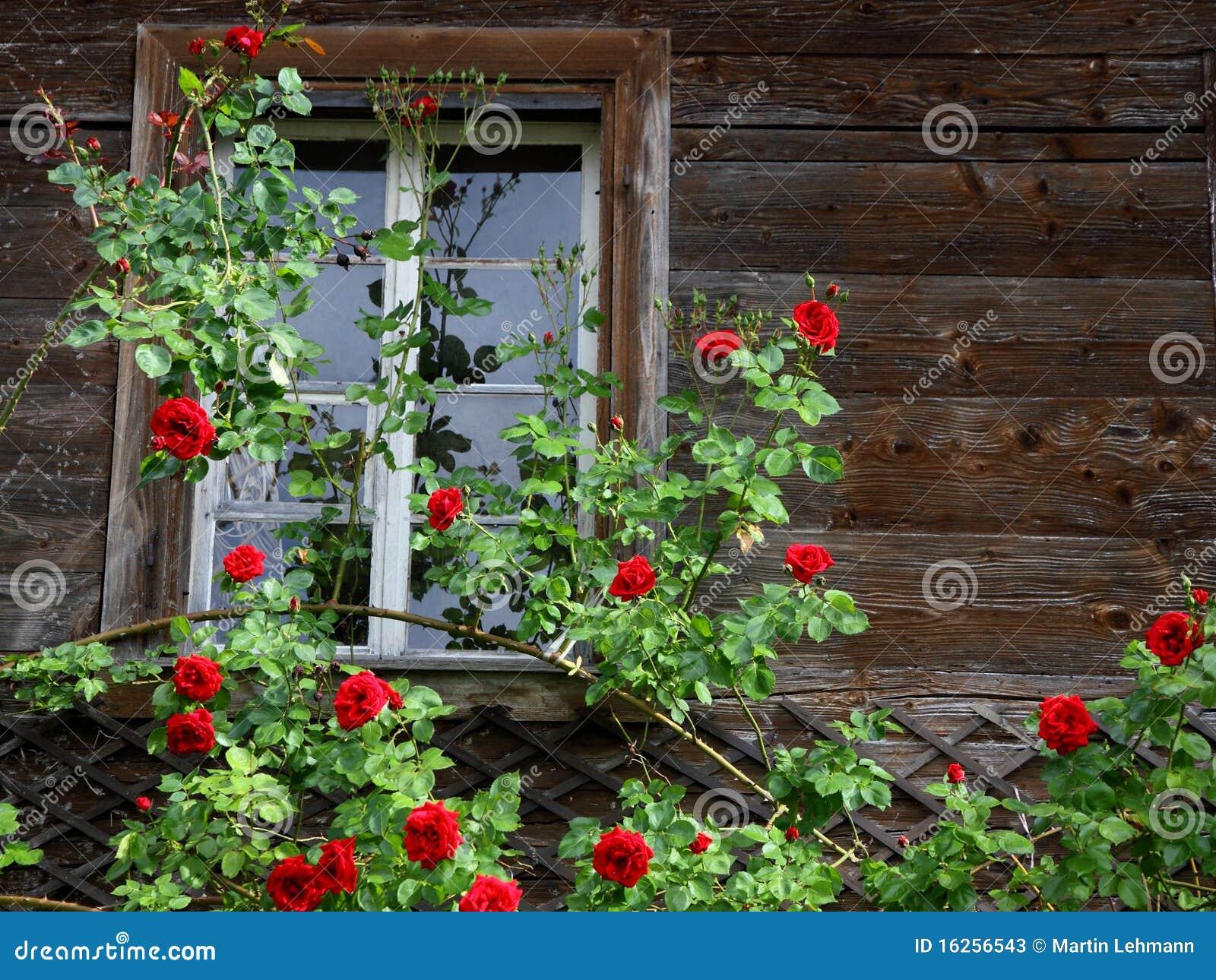 Παλαιό σπίτι που περιπλέκεται από τα κόκκινα τριαντάφυλλα Στοκ ...