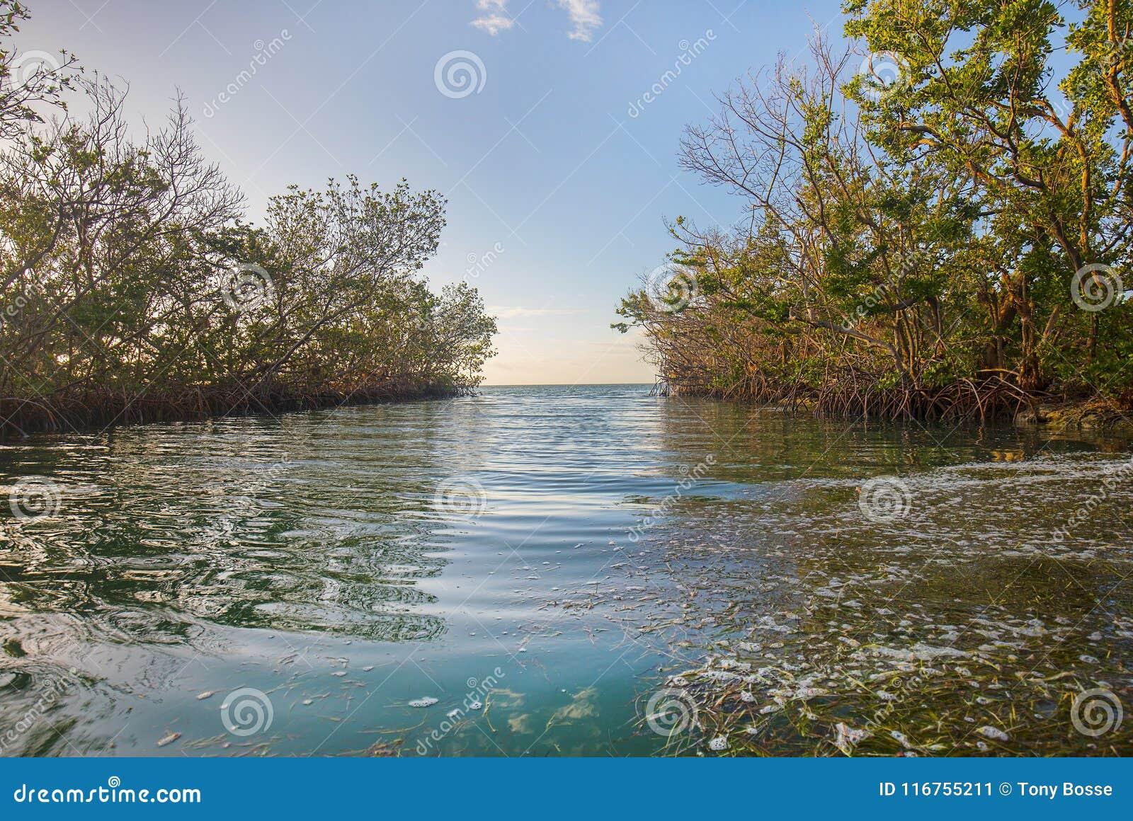 Παλιρροιακός κολπίσκος στην ανατολή ξημερωμάτων