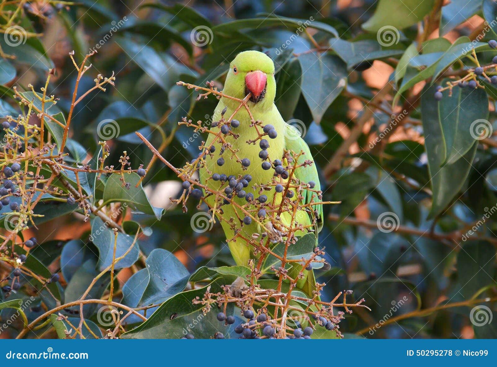 Παπαγάλος στο τροπικό δάσος