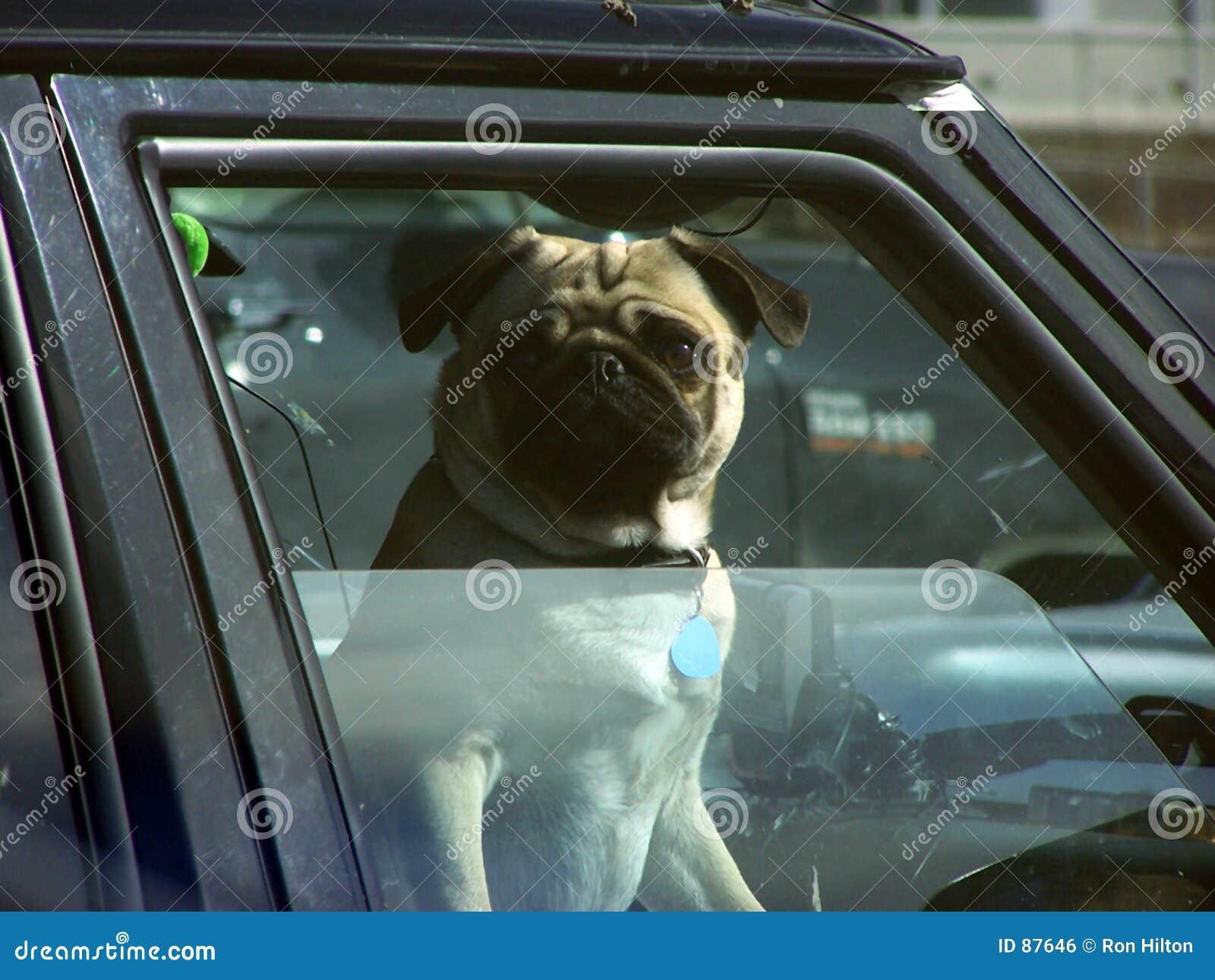 παράθυρο σκυλιών αυτοκ&i