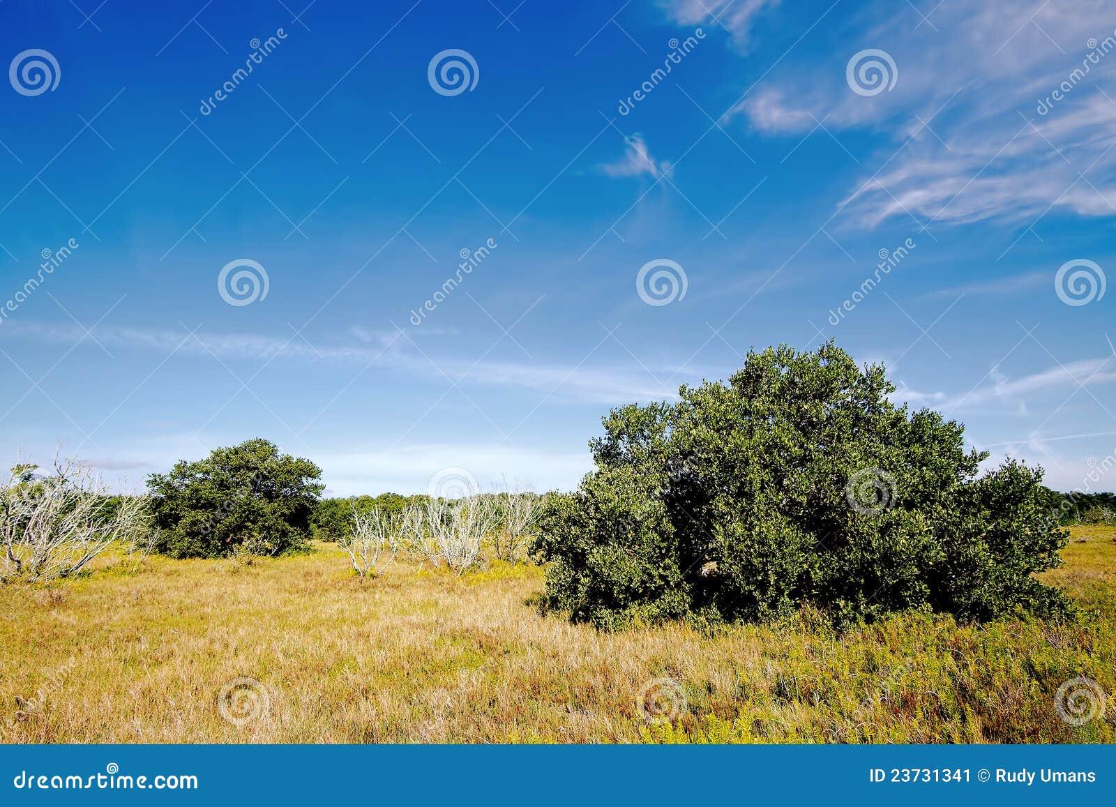 παράκτια λιβάδια everglades 1