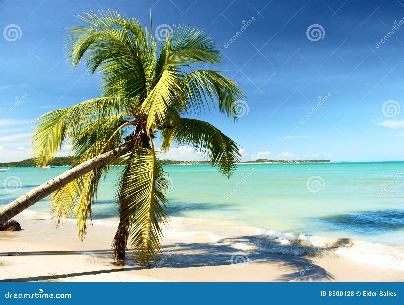 παραλία Βραζιλία τροπική