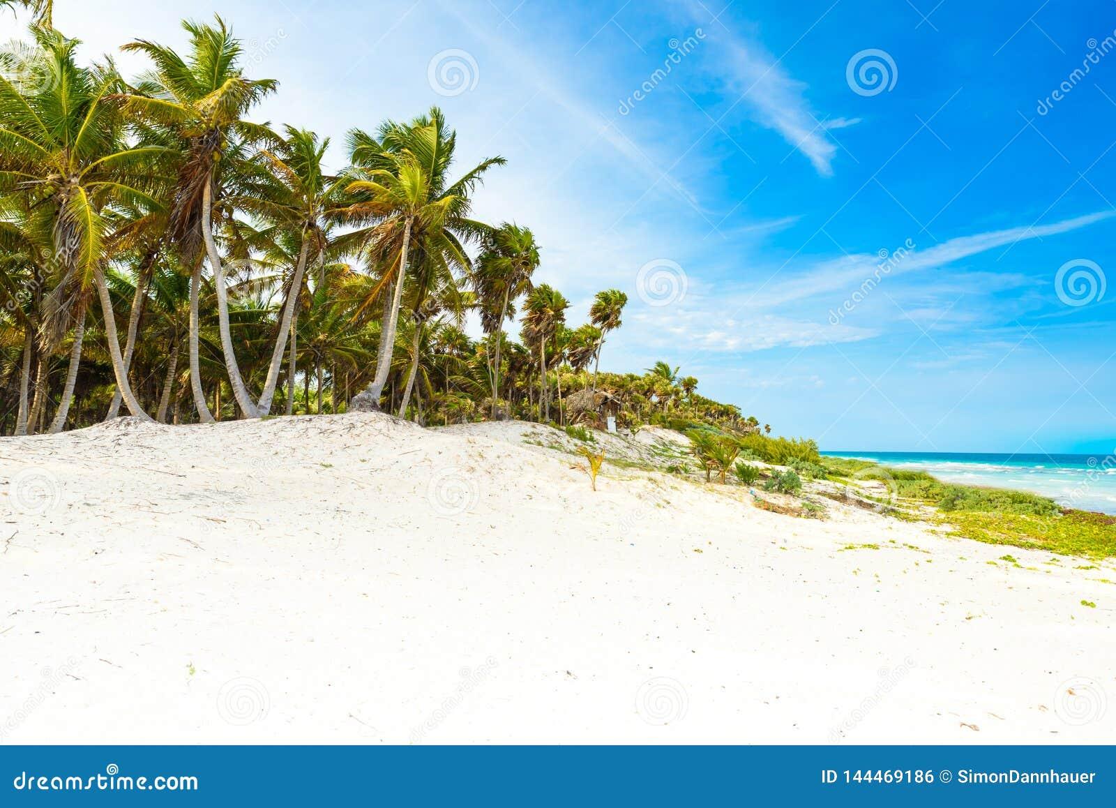 Παραλία παραδείσου με τους όμορφους φοίνικες - καραϊβική θάλασσα στο Μεξικό, Tulum