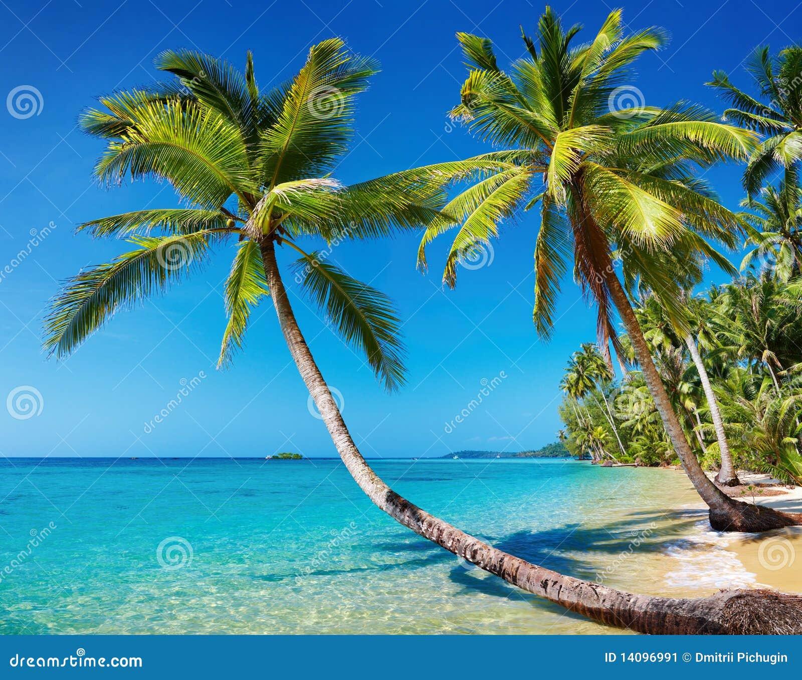 παραλία Ταϊλάνδη τροπική
