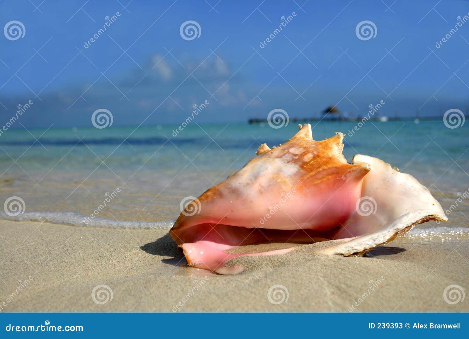 παραλία conch