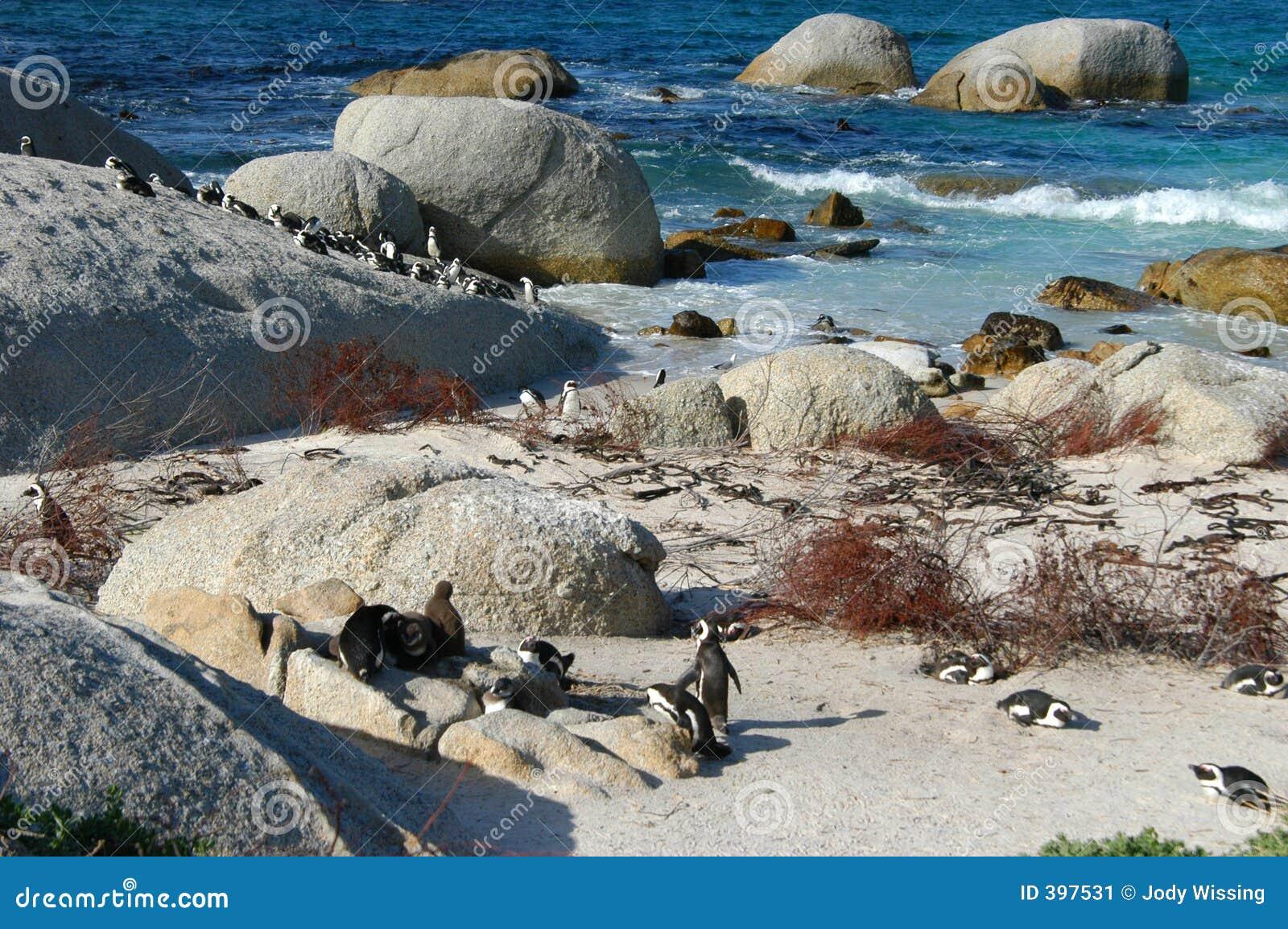 παραλία penguin