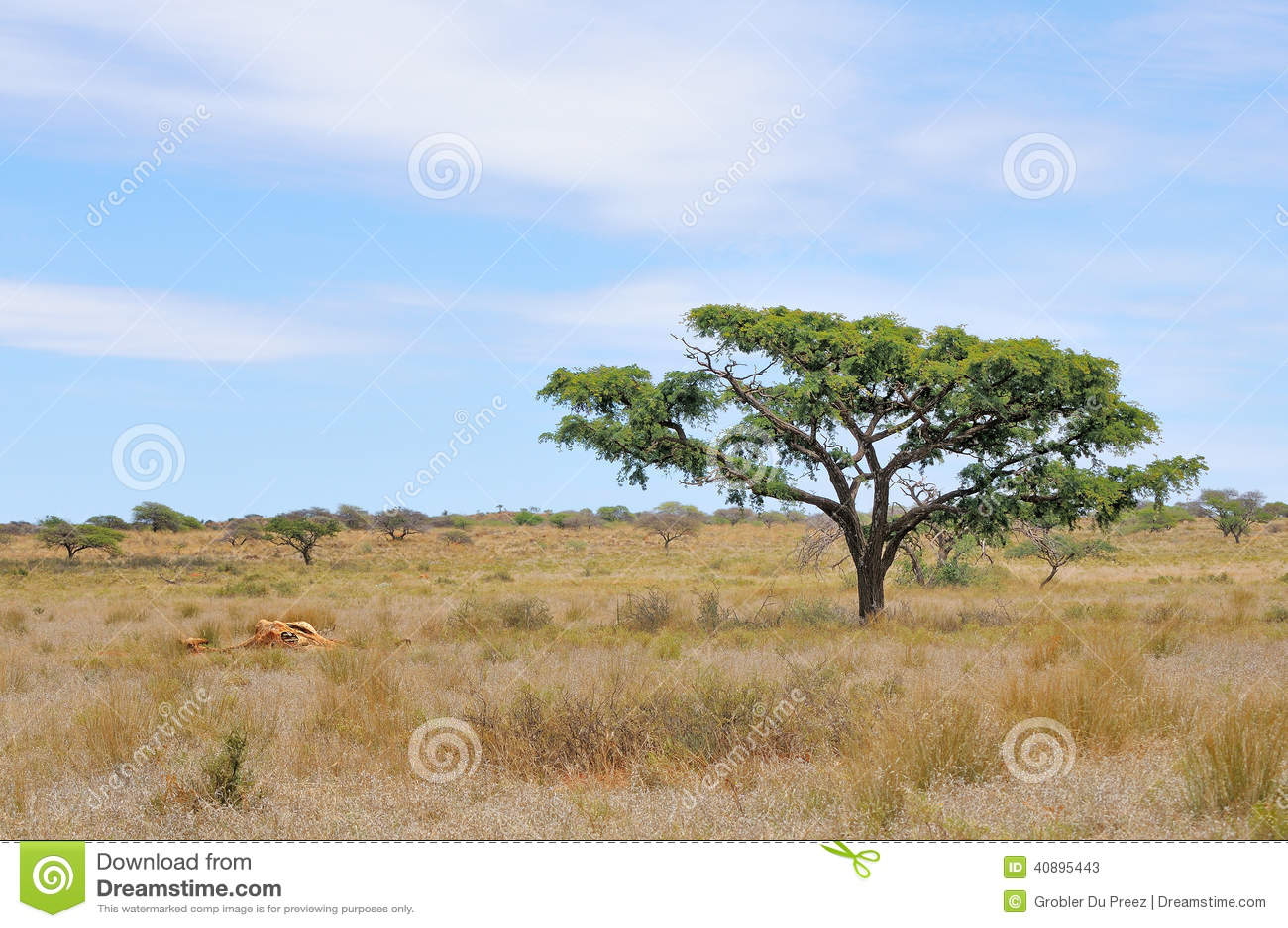 Παραμένει giraffe