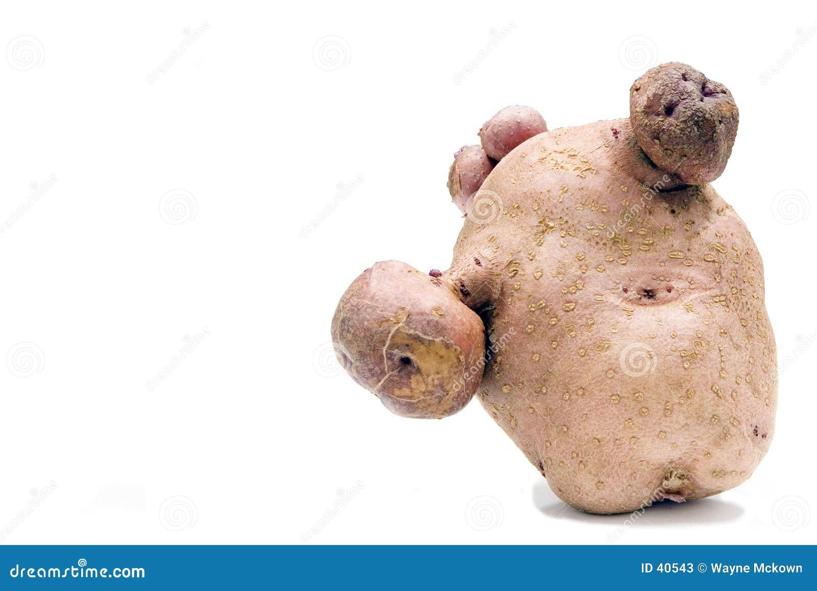 παραμορφωμένος potatoe