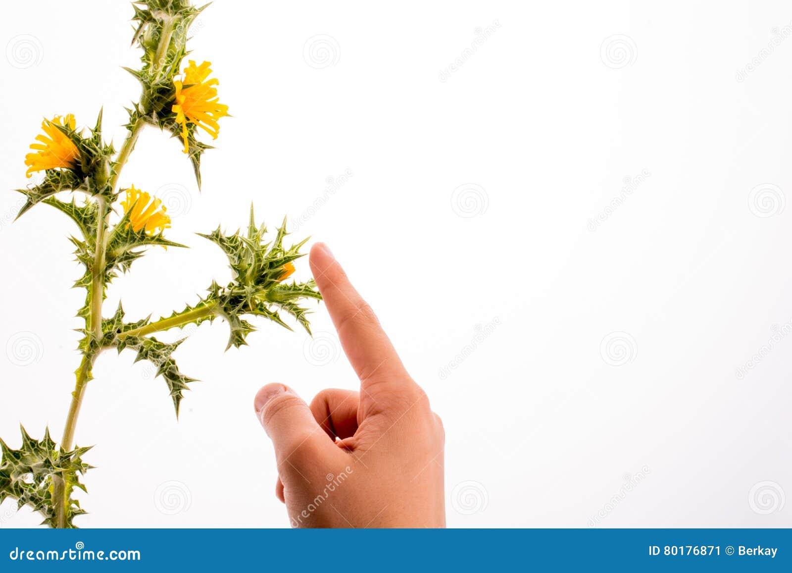 Παραδώστε την αφή με λουλούδια