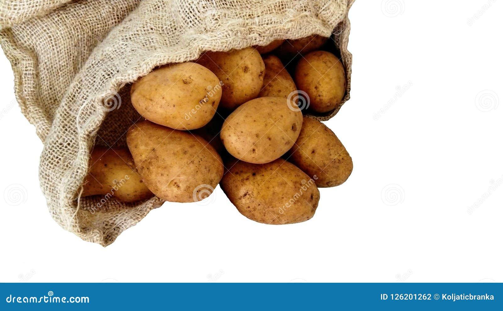 Πατάτες και σάκοι γιούτας σε ένα άσπρο υπόβαθρο Υγιή τρόφιμα, λαχανικά, αγορά, φυτεία