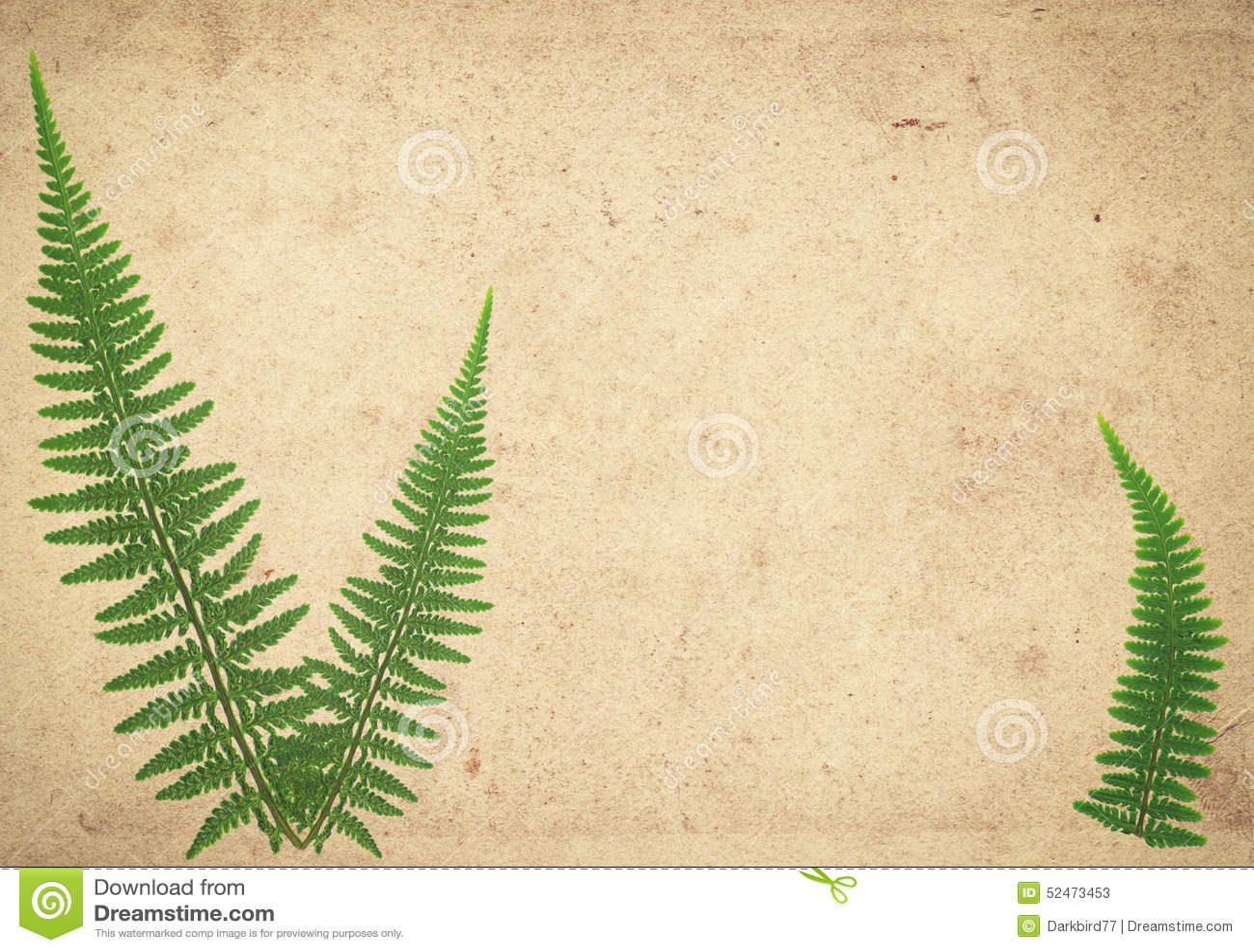 Παλαιά εκλεκτής ποιότητας σύσταση εγγράφου με τα ξηρά φύλλα φτερών