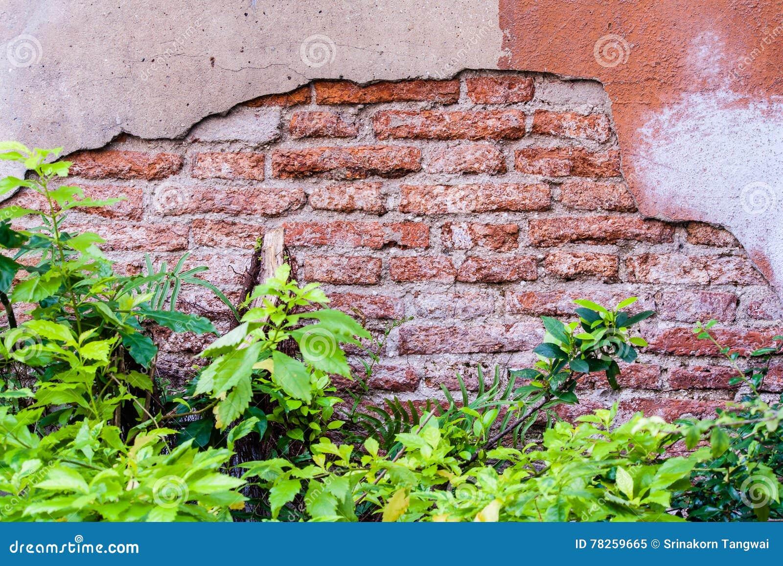 παλαιός τοίχος φυτών τούβ&lam