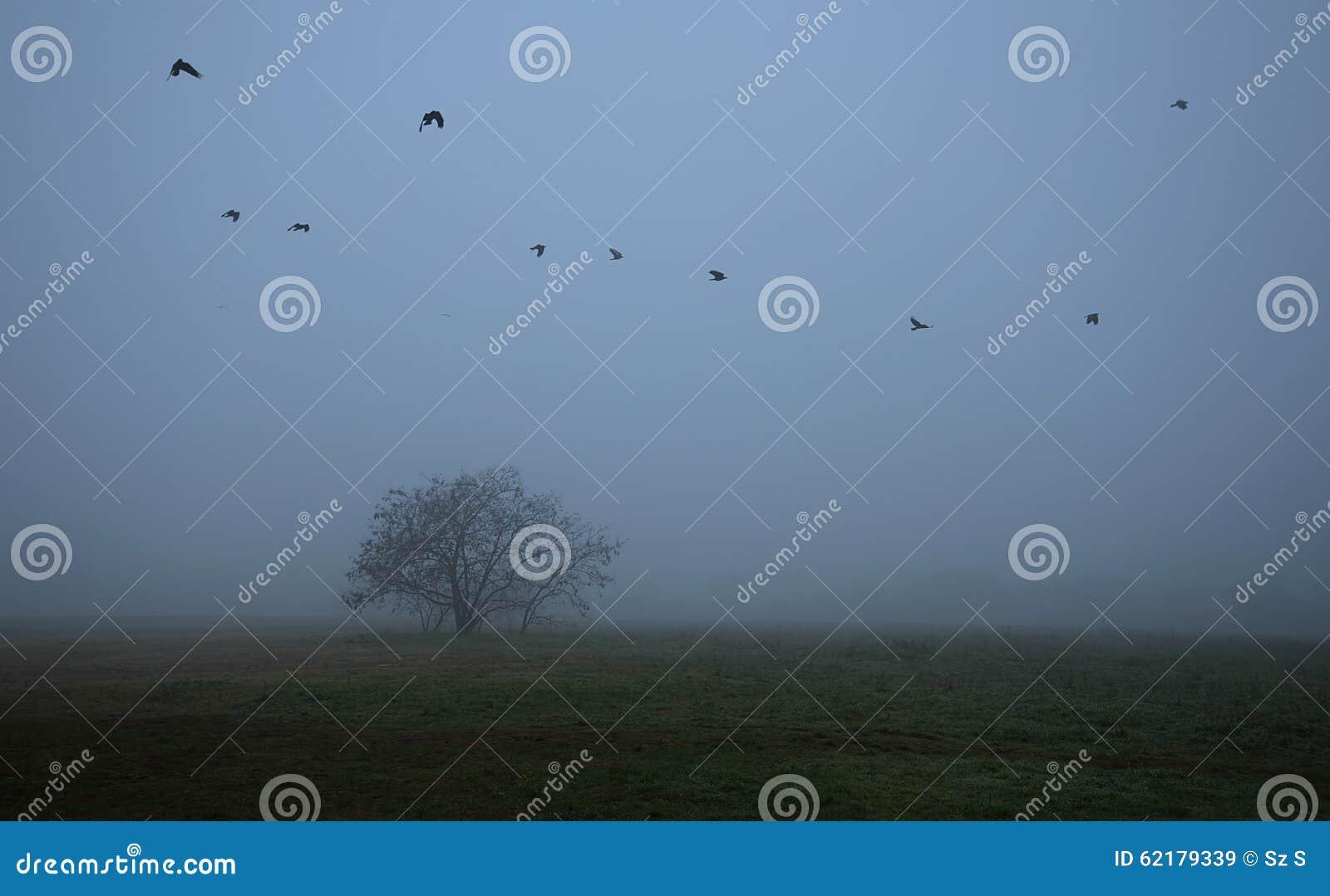 Παλαιό δέντρο στον τομέα μια ομιχλώδης ημέρα