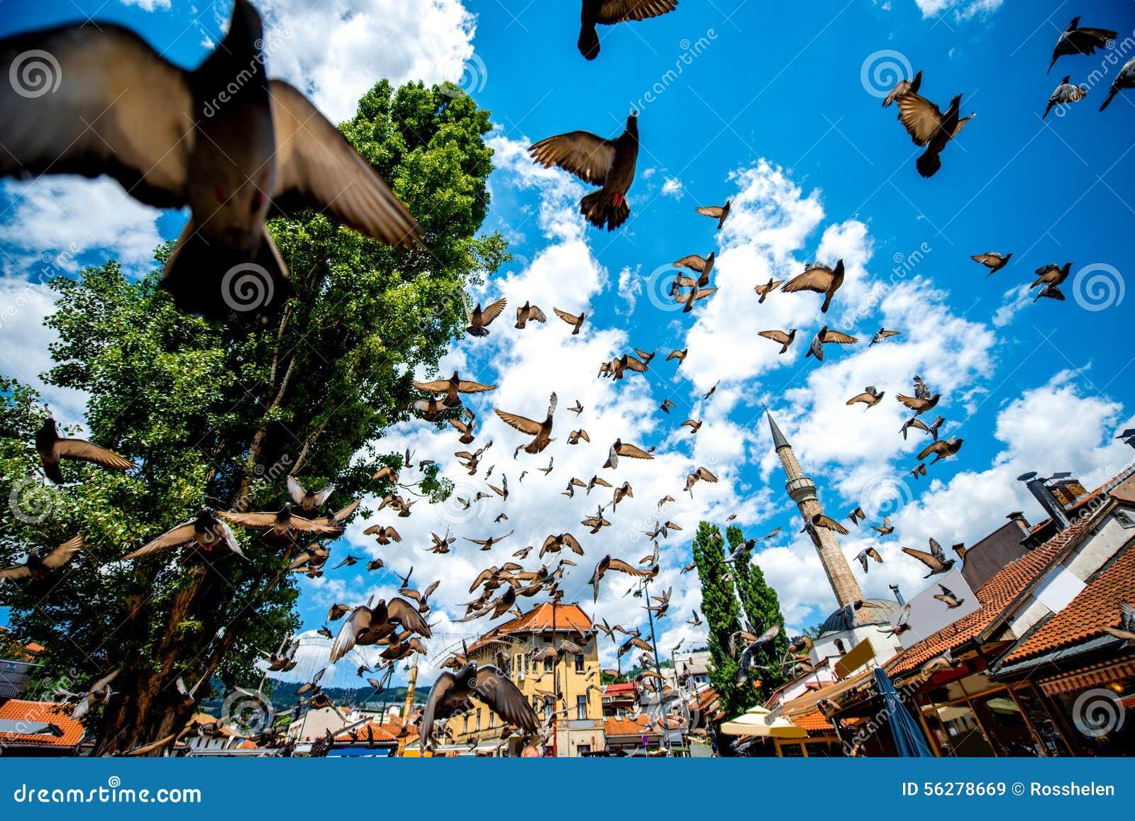 Παλαιό τετράγωνο με τα πετώντας περιστέρια στο Σαράγεβο