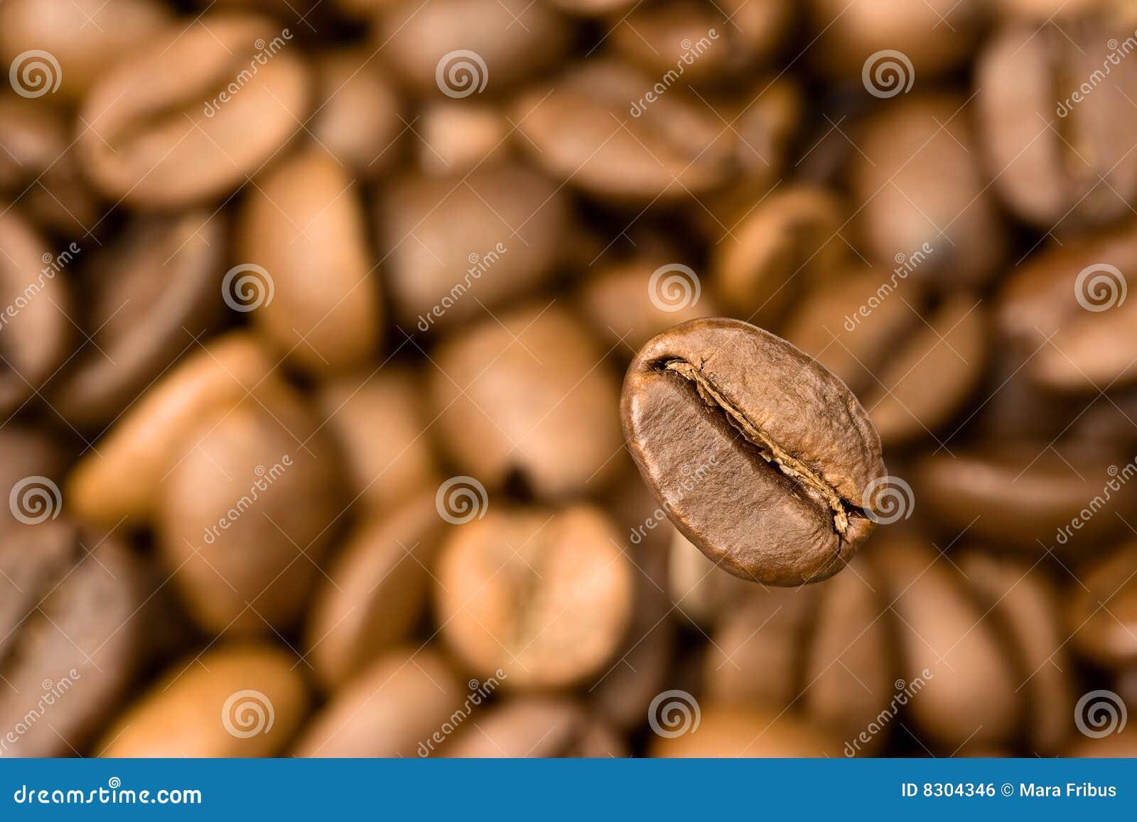 πεδίο καφέ φασολιών