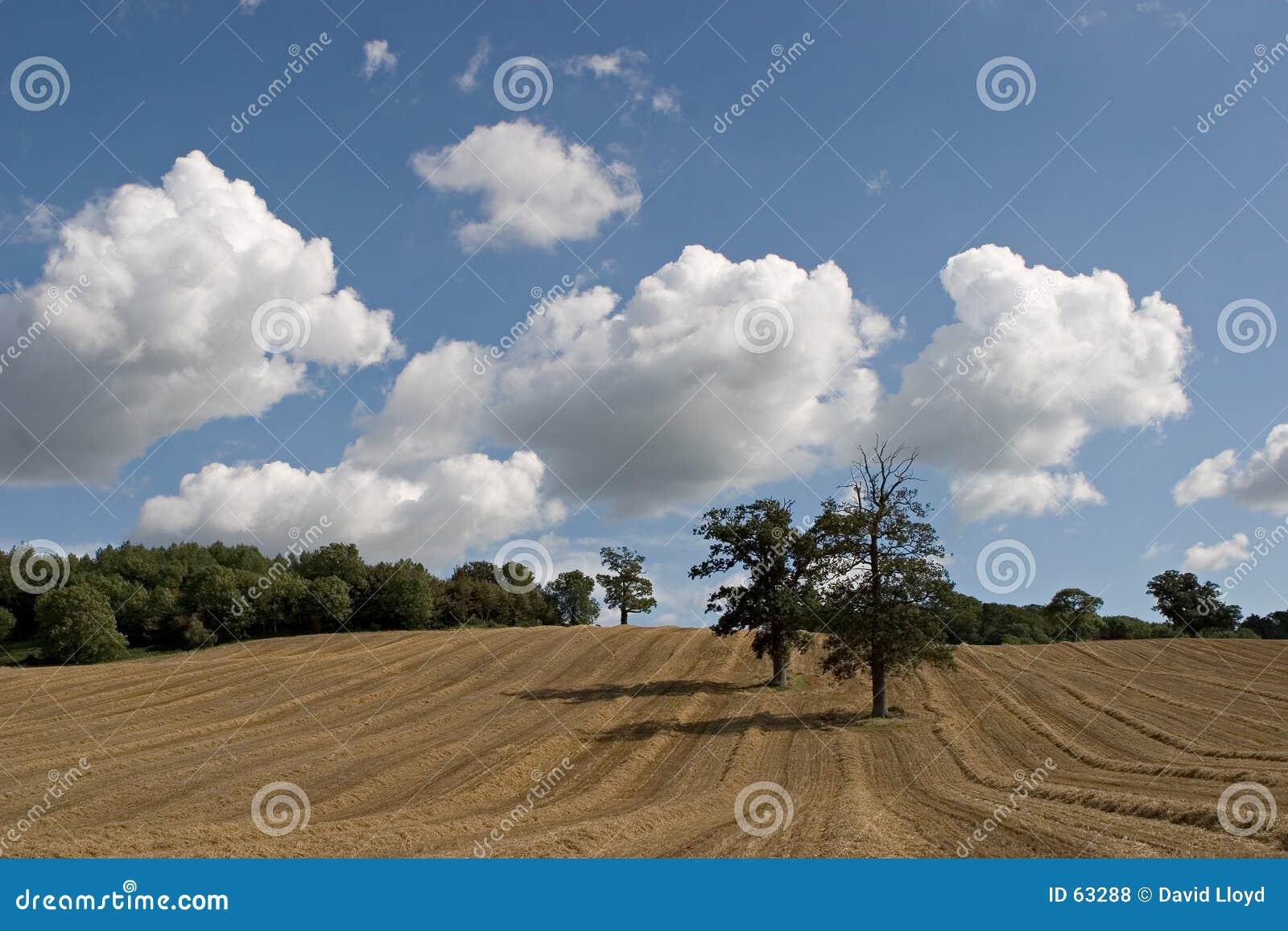 Download πεδίο 2 στοκ εικόνες. εικόνα από καλλιέργεια, χώρα, δέντρο - 63288
