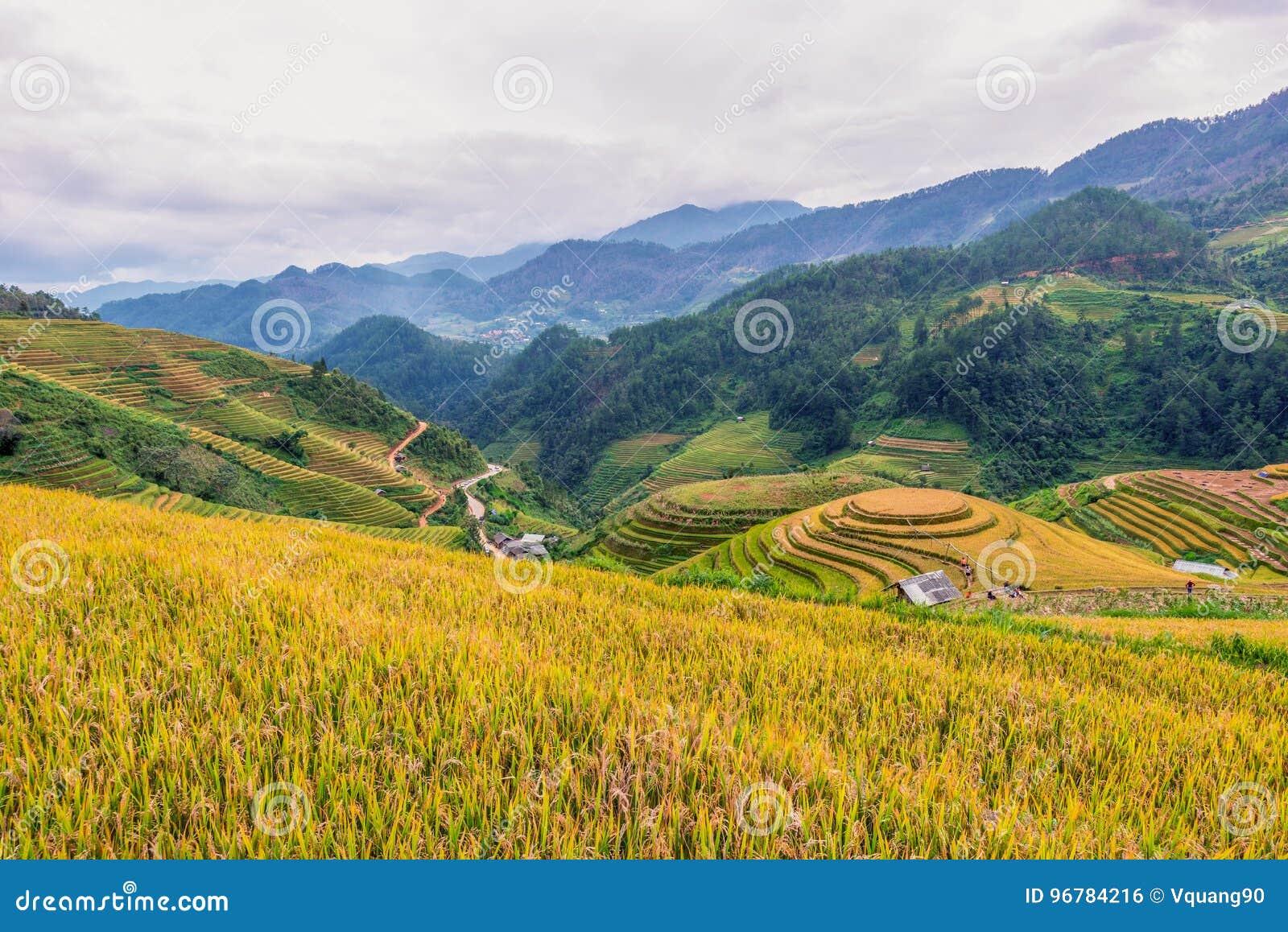 Πεζούλι ρυζιού της MU Cang Chai, Yenbai, βόρειο Βιετνάμ