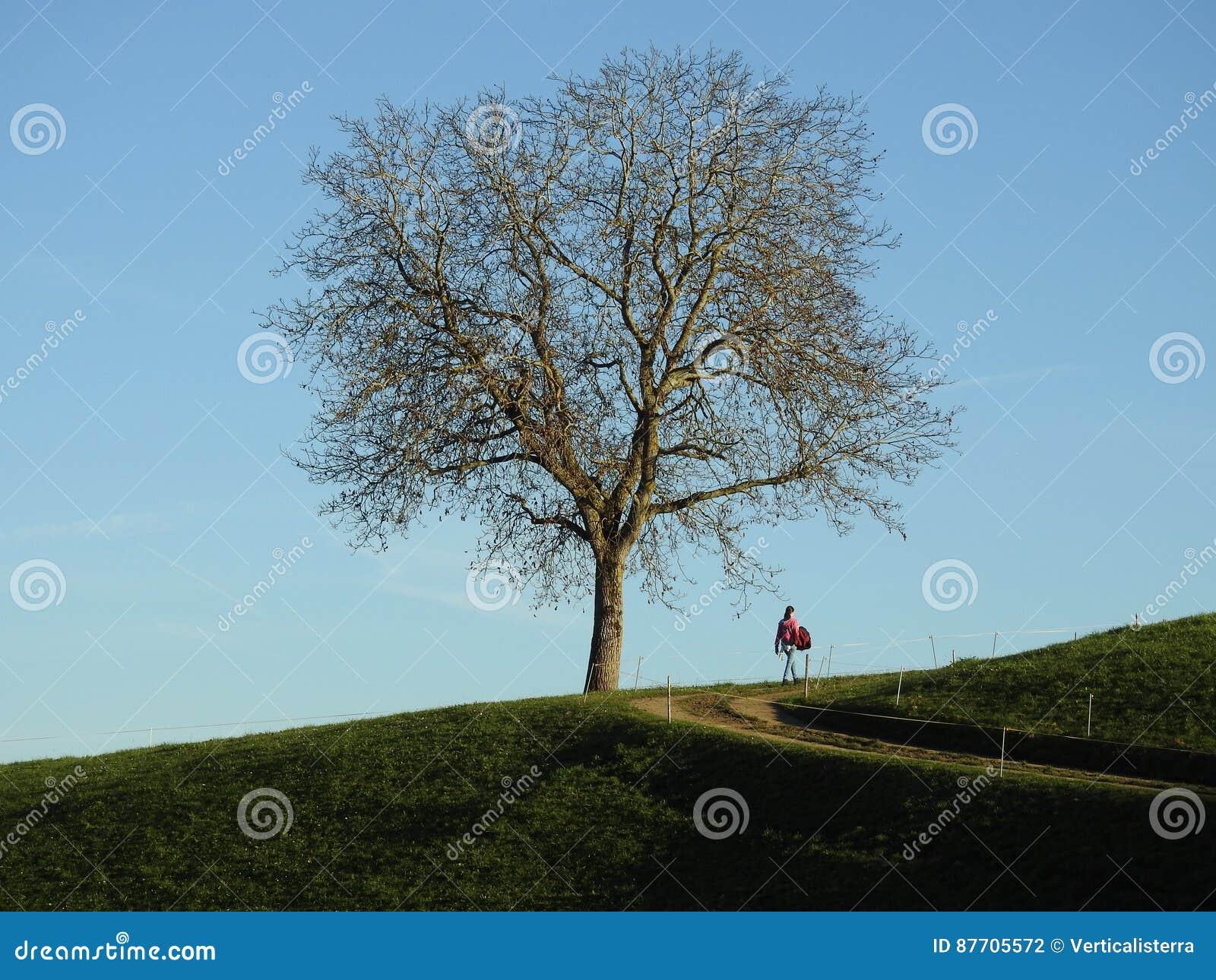 Περίπατος μόνο κάτω από ένα δέντρο ξύλων καρυδιάς
