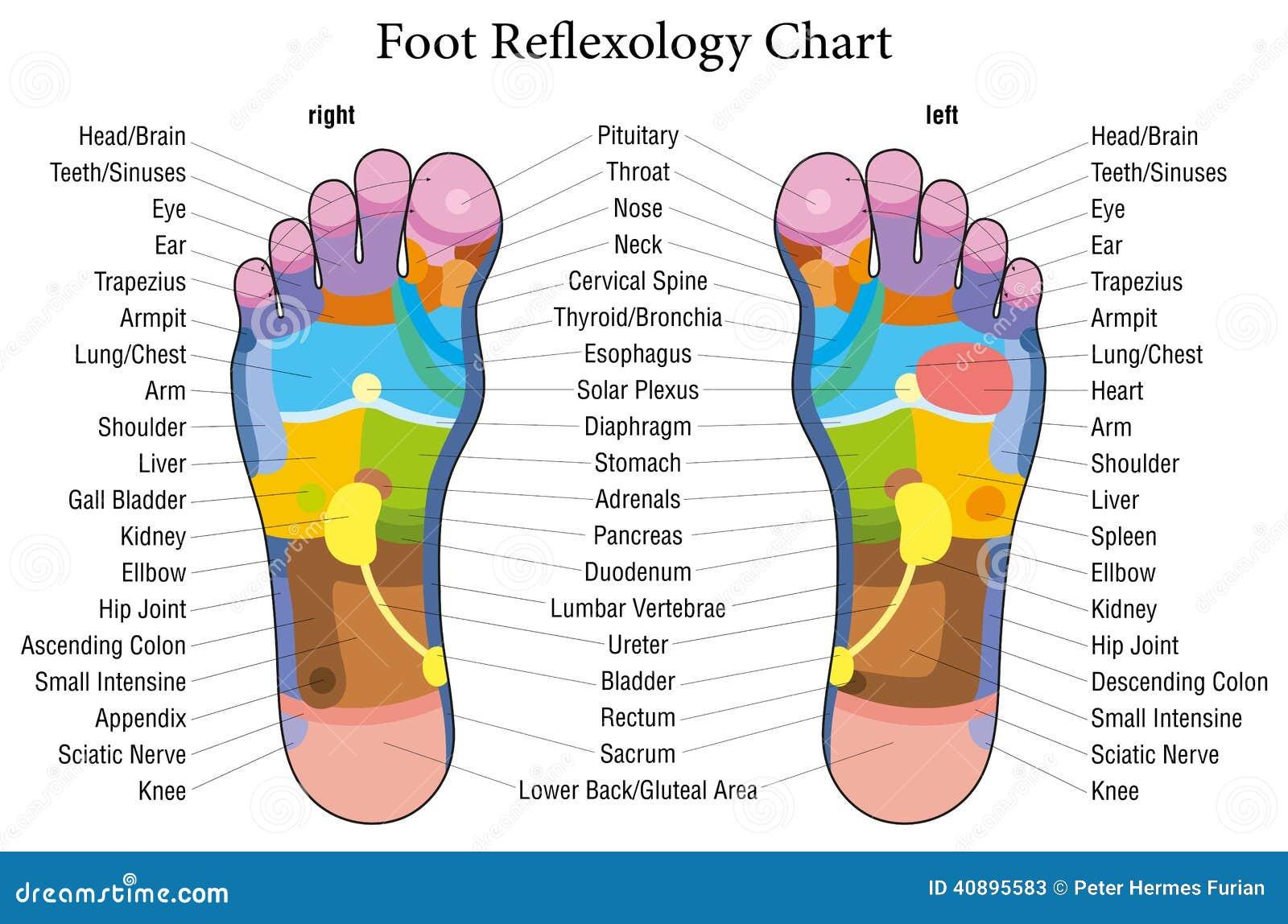 Περιγραφή διαγραμμάτων reflexology ποδιών