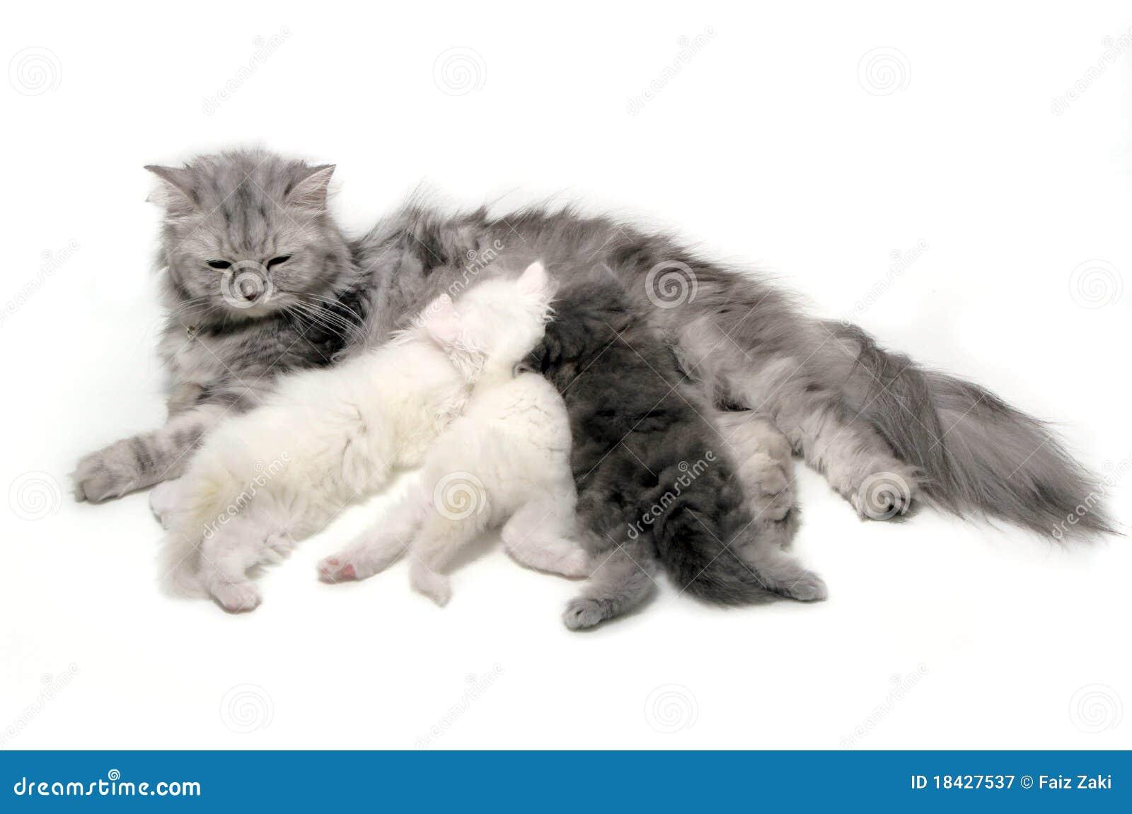περιποίηση γατών