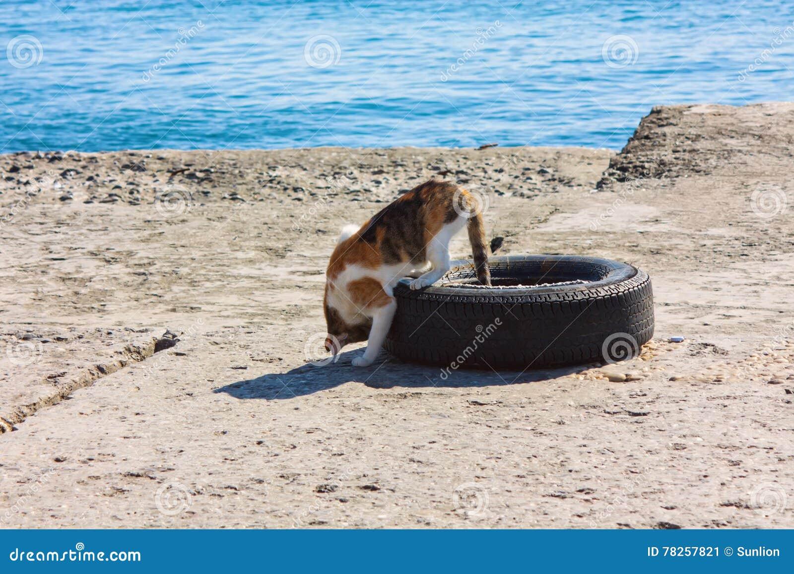 Περιπλανώμενη γάτα