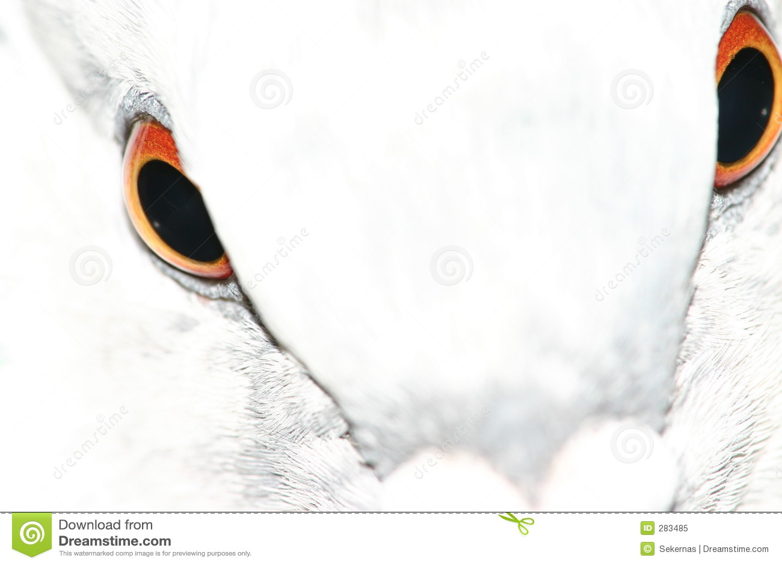 περιστέρι ματιών