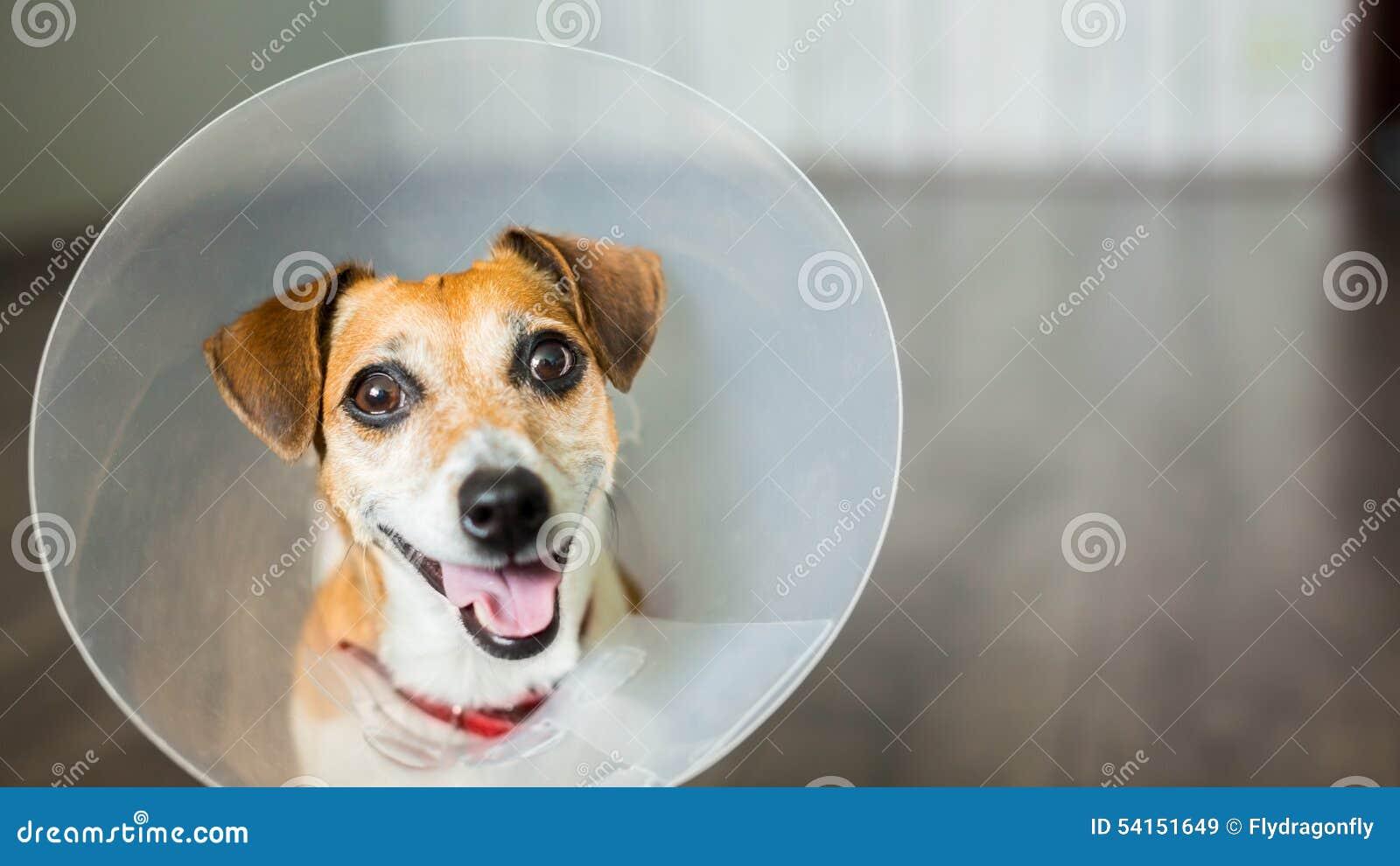 Περιλαίμιο σκυλιών κτηνιάτρων χαριτωμένο