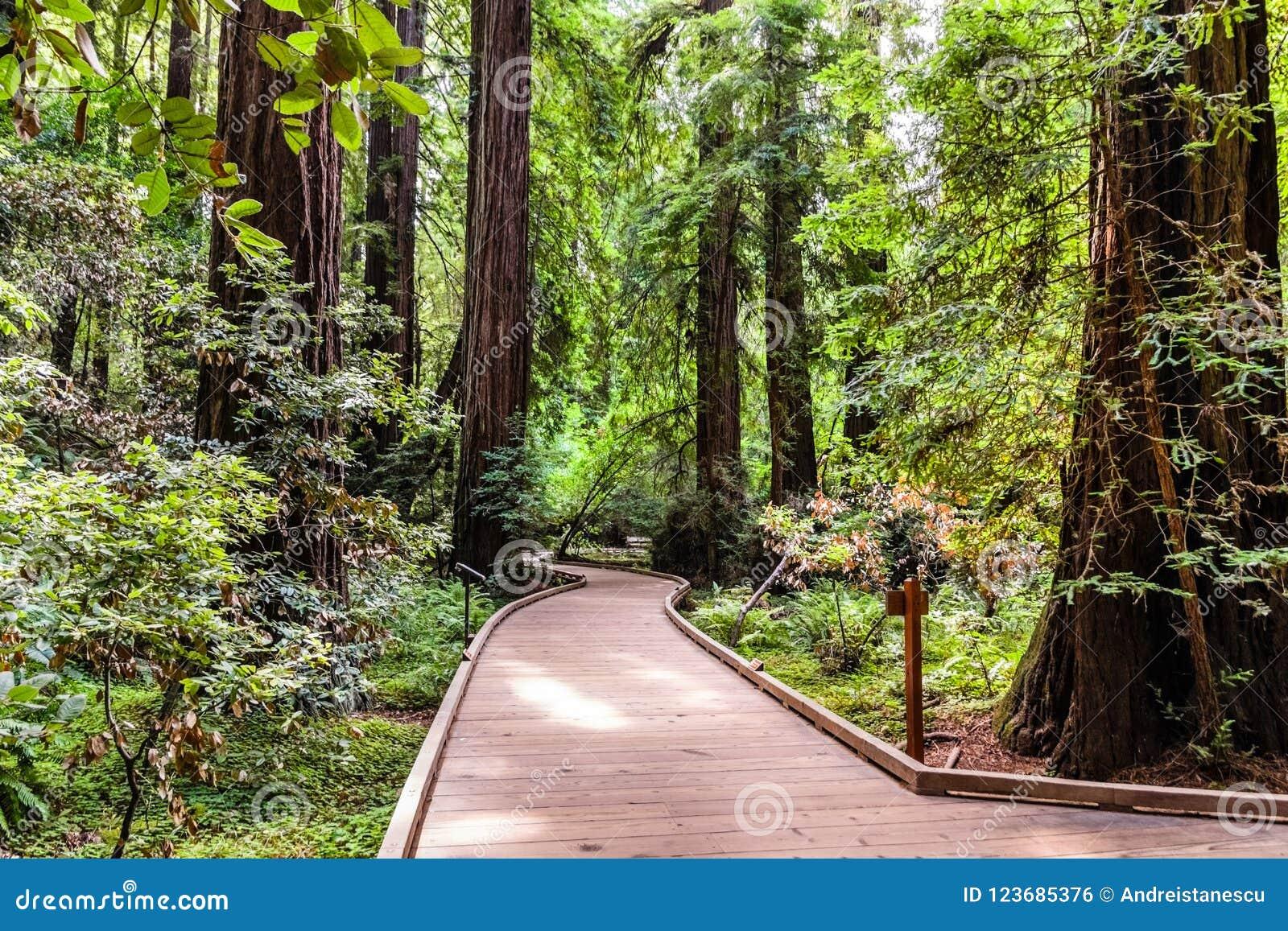 Περπάτημα μέσω του εθνικού μνημείου ξύλων Muir