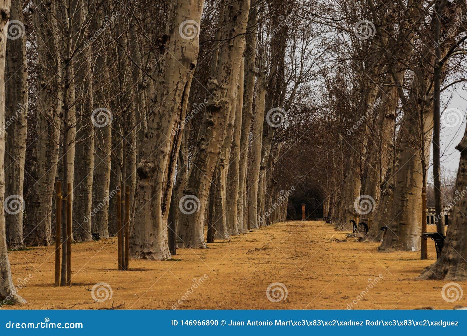 Περπάτημα μεταξύ των δέντρων