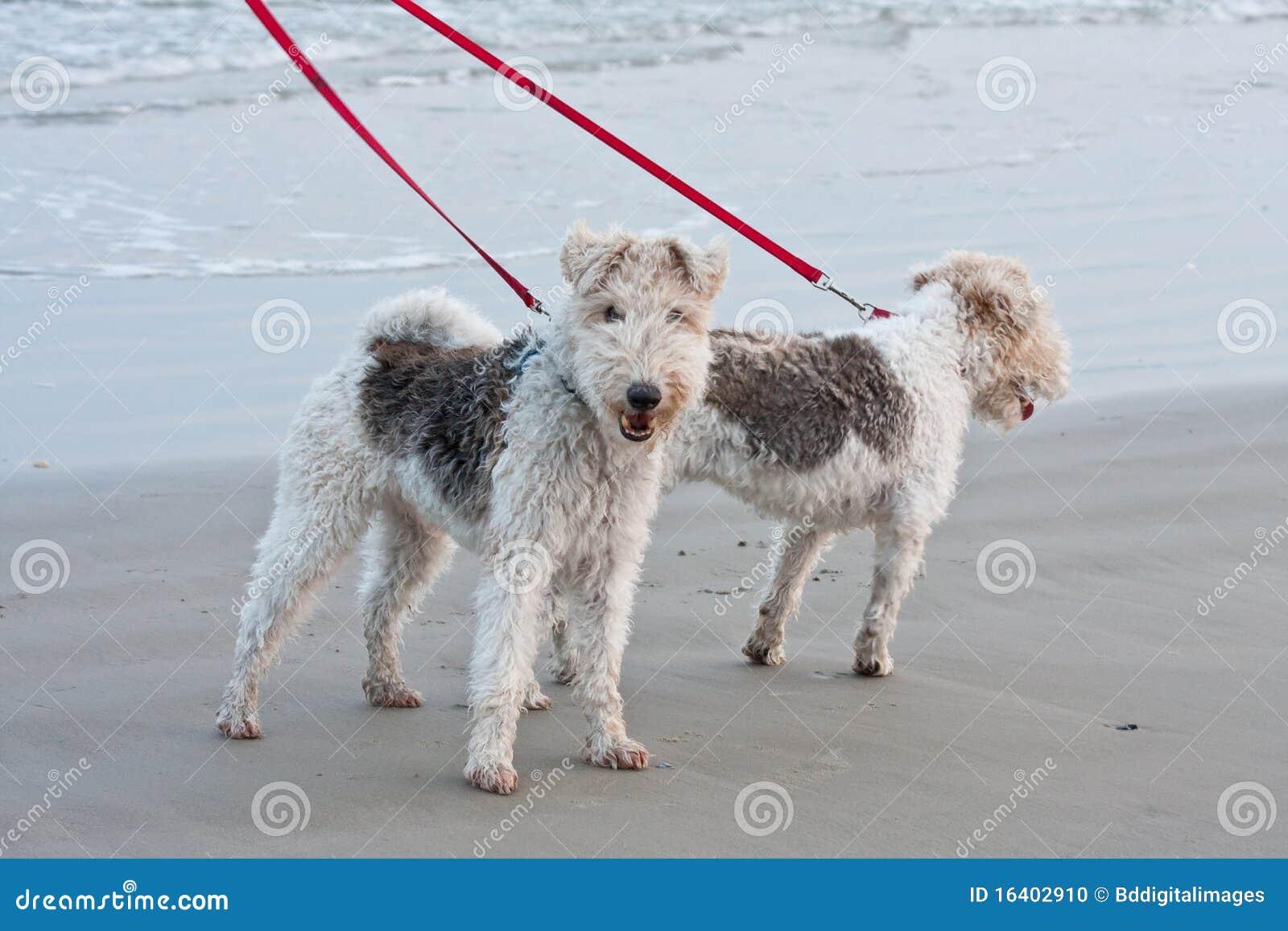 περπάτημα σκυλιών παραλιών