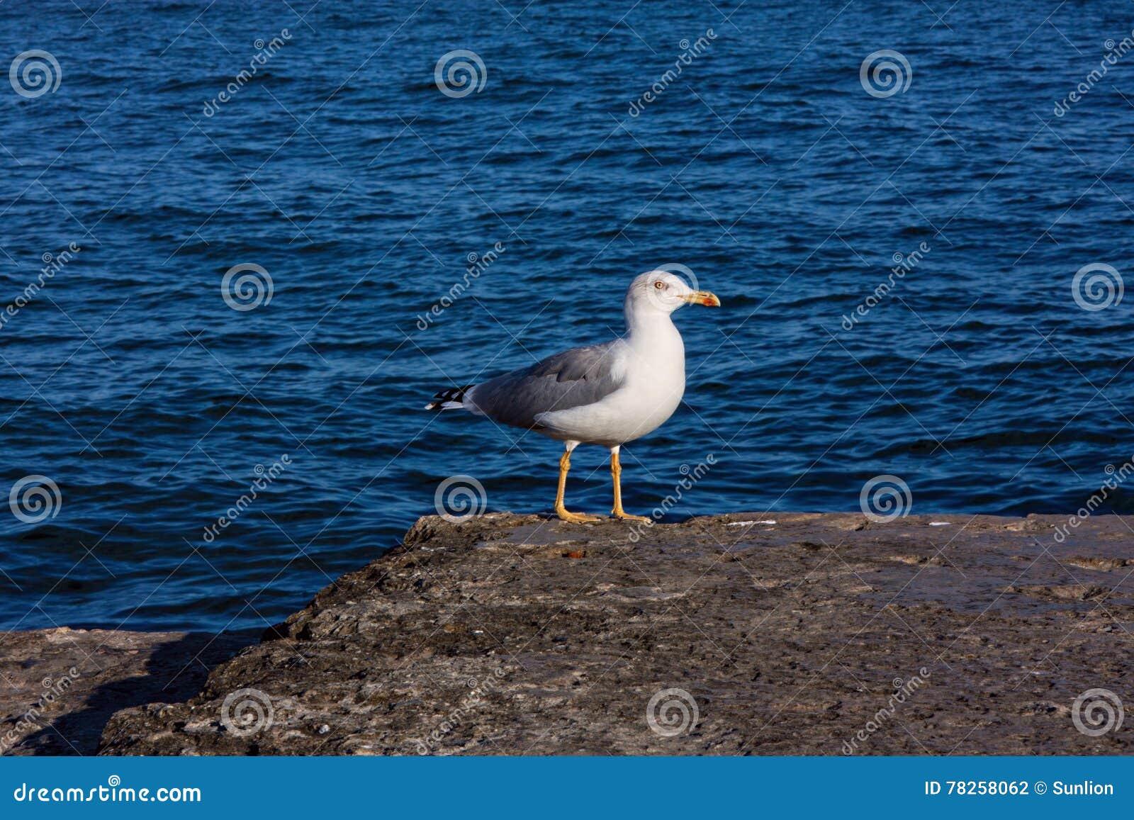 Περπάτημα seagull στην ακτή
