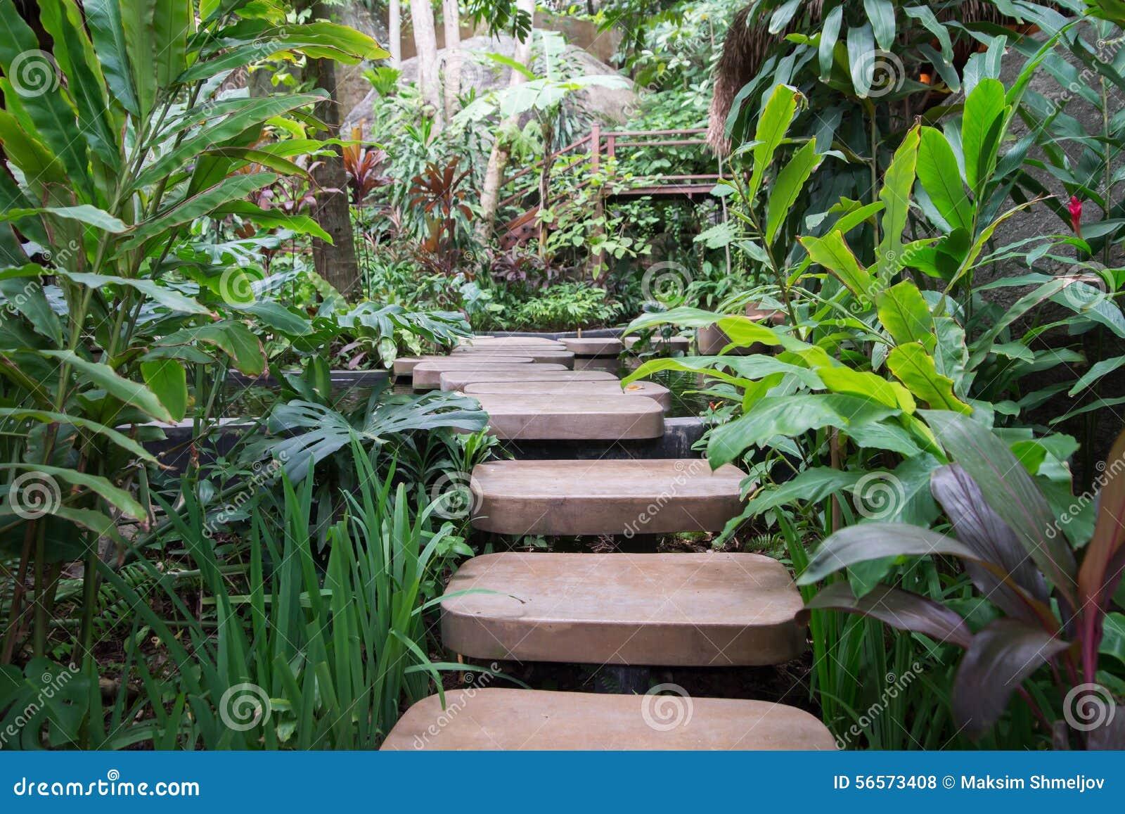 Download Περπατημένη πορεία μέσω της ταϊλανδικής φύσης Στοκ Εικόνες - εικόνα από ζούγκλα, δάσος: 56573408