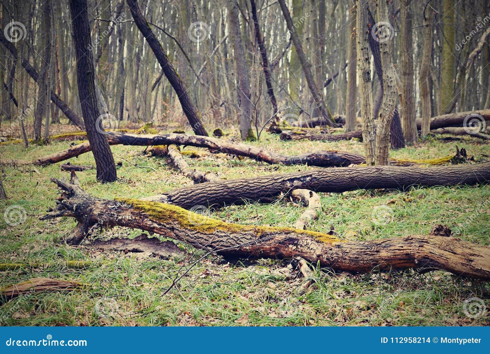 Πεσμένα δέντρα στο δασικό φυσικό ζωηρόχρωμο υπόβαθρο